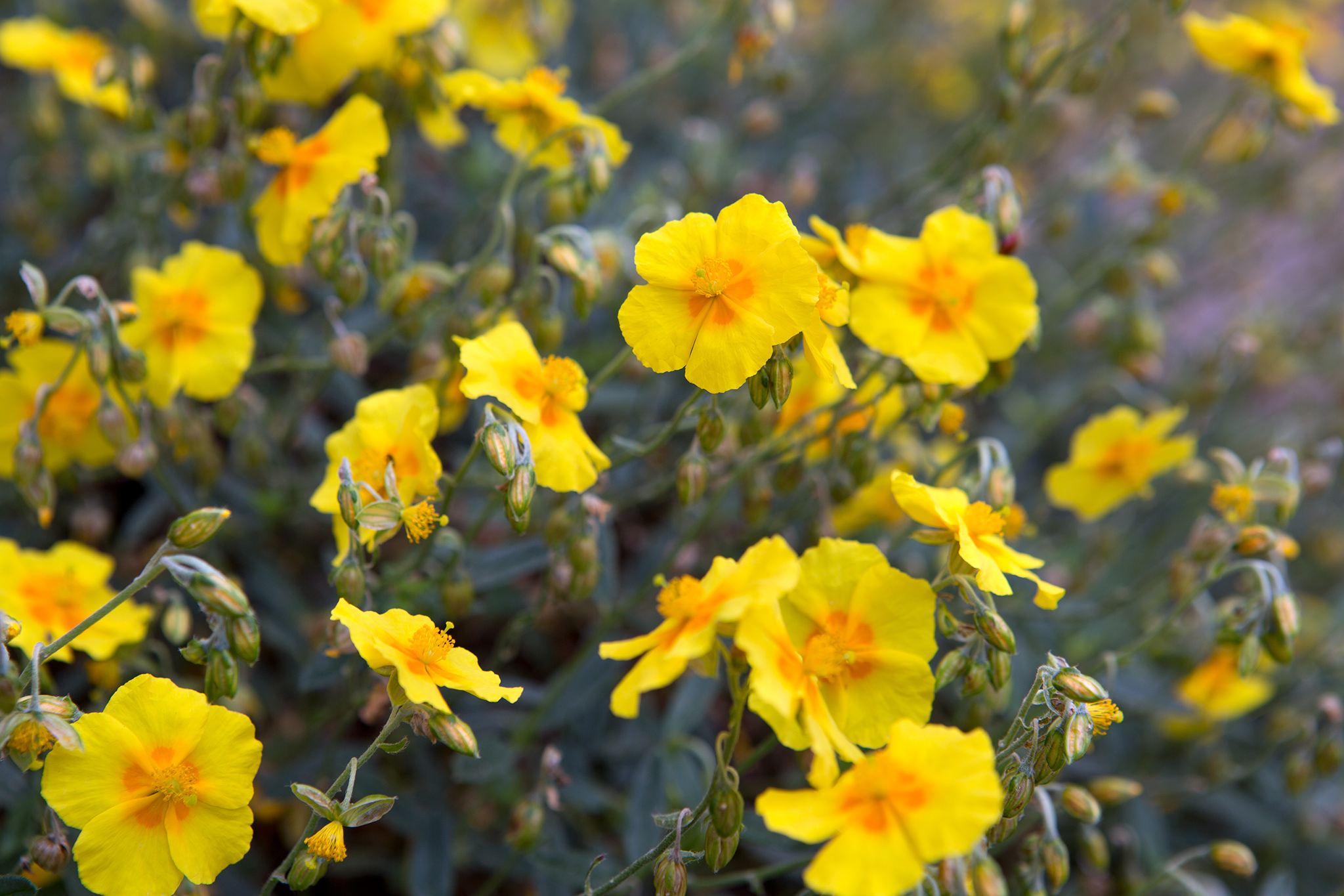Plants For A South Facing Border Gardenersworld