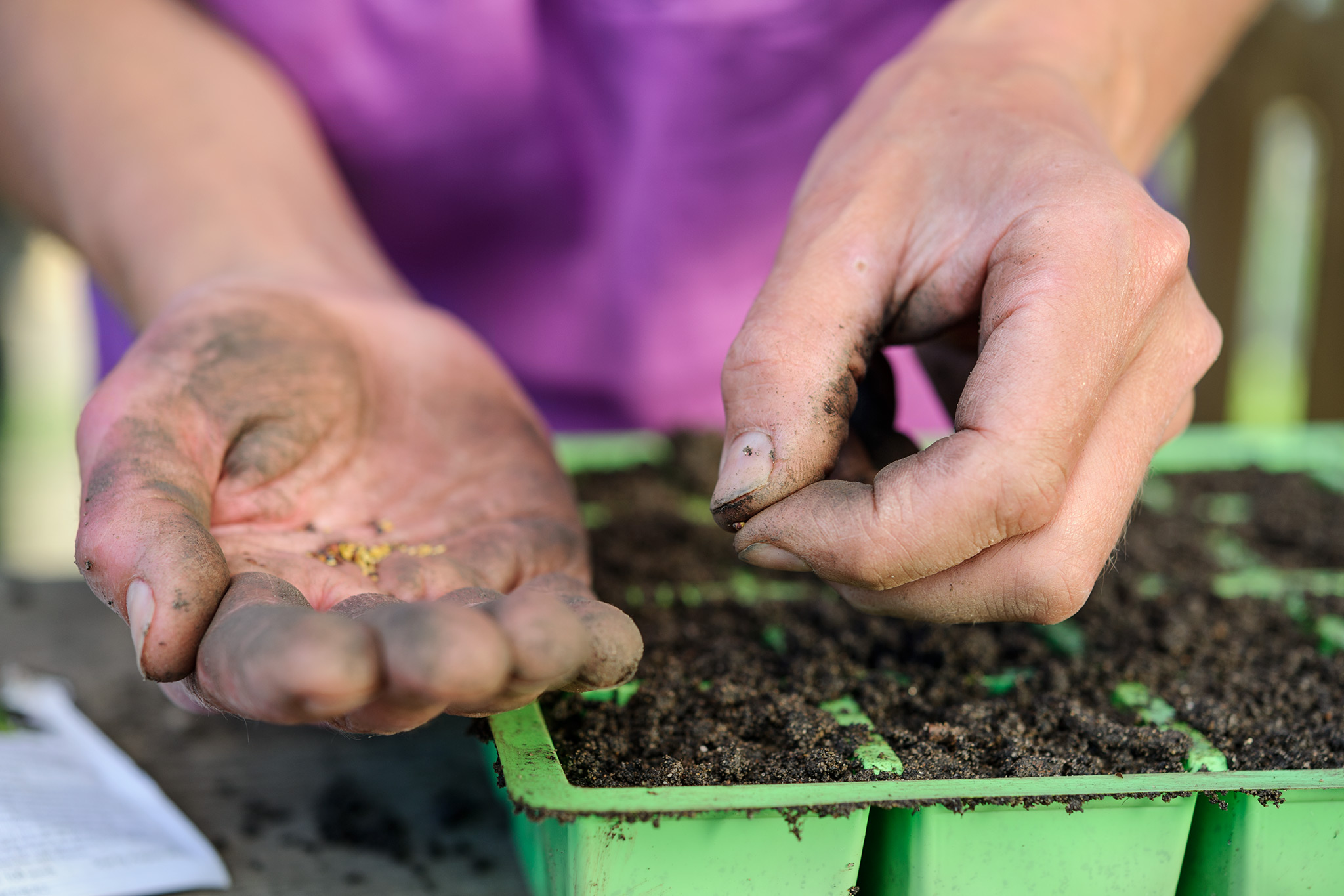 sowing-cabbage-seeds-in-modules-3