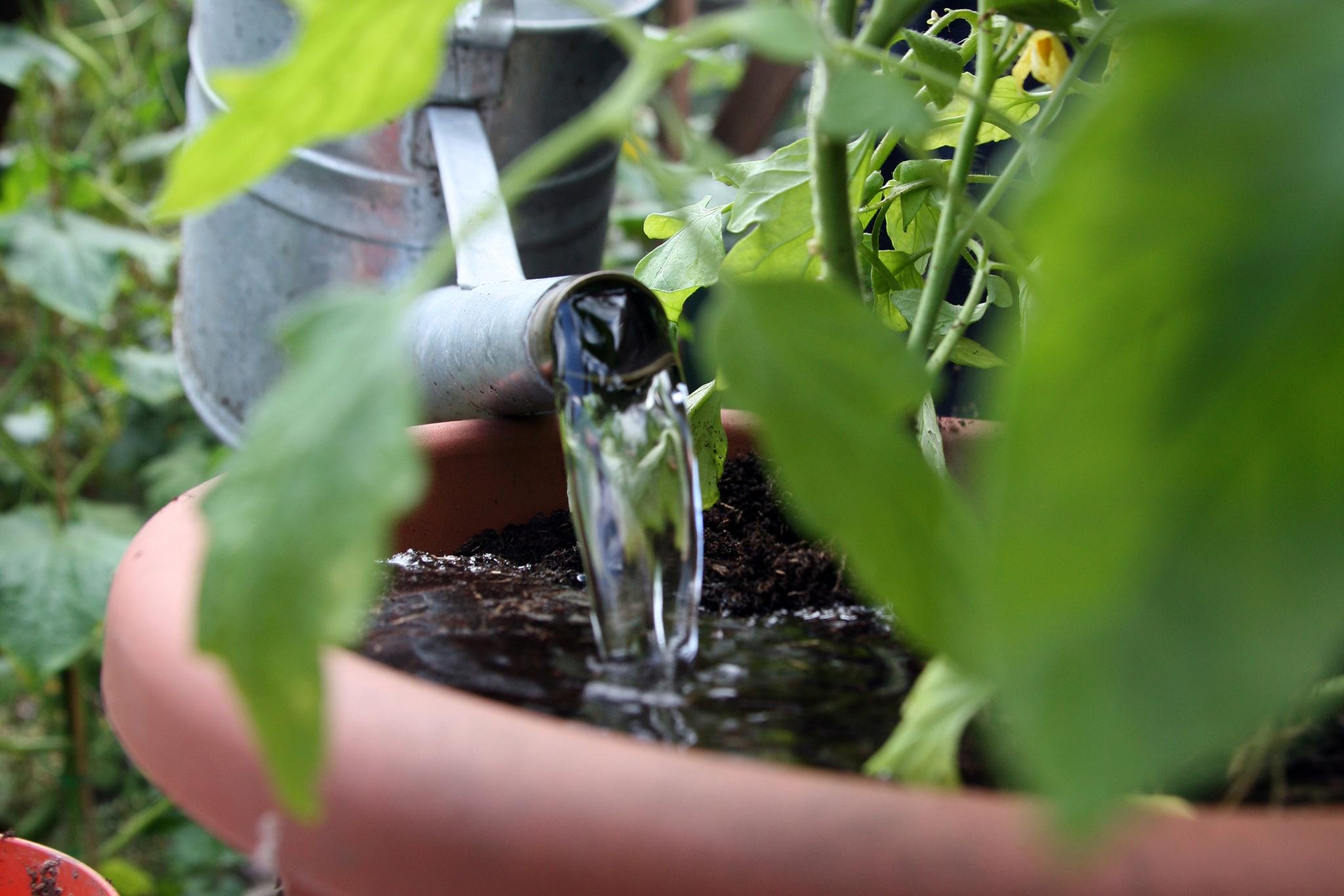 water-regularly-4