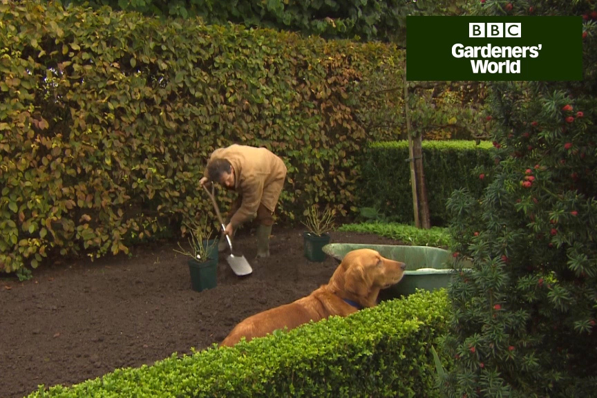 How to plant roses in autumn video