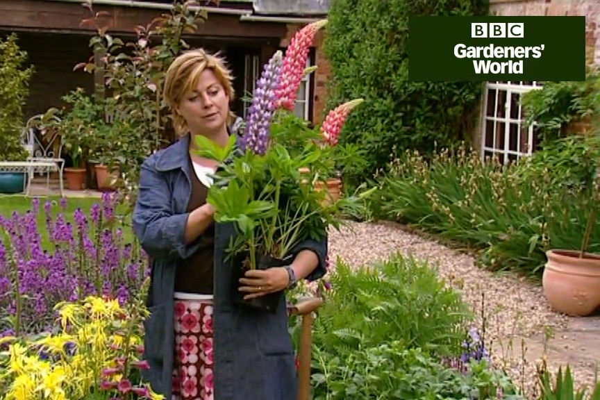 How to grow lupins video