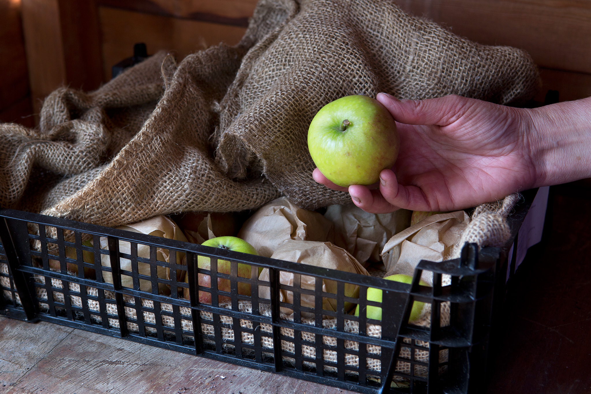 storing-apples-6