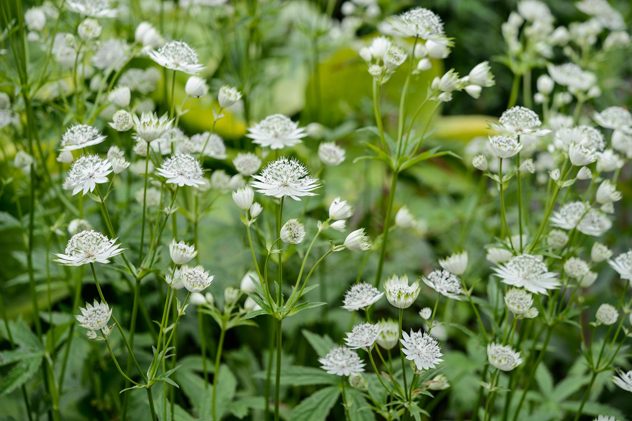 The best shade loving plants gardenersworld the best shade loving plants mightylinksfo