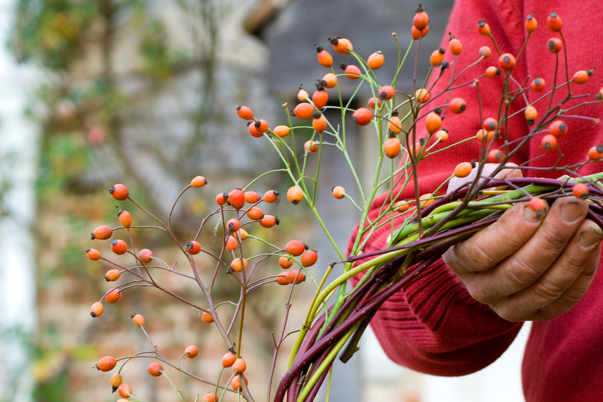 wildlife-friendly-christmas-wreath-8