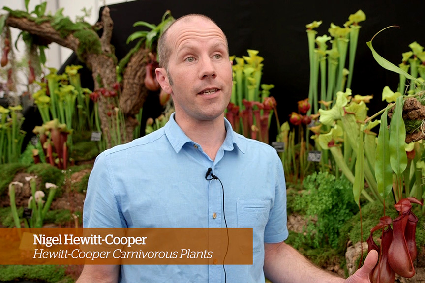 Caring for carnivorous plants Golden Rules