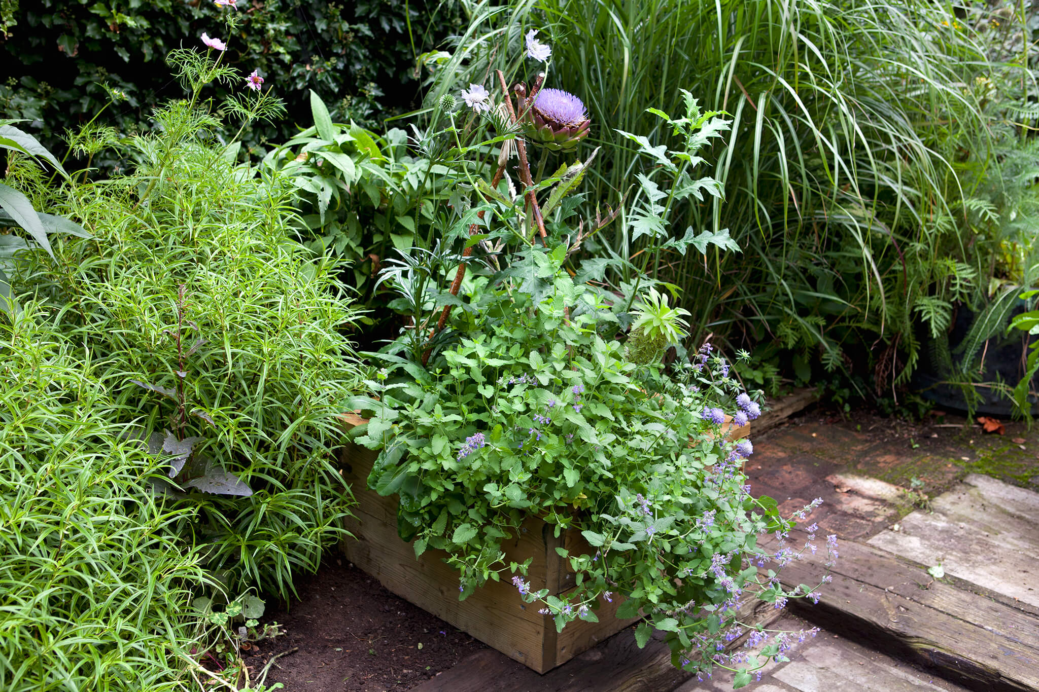 cardoon-scabious-and-nepeta-3