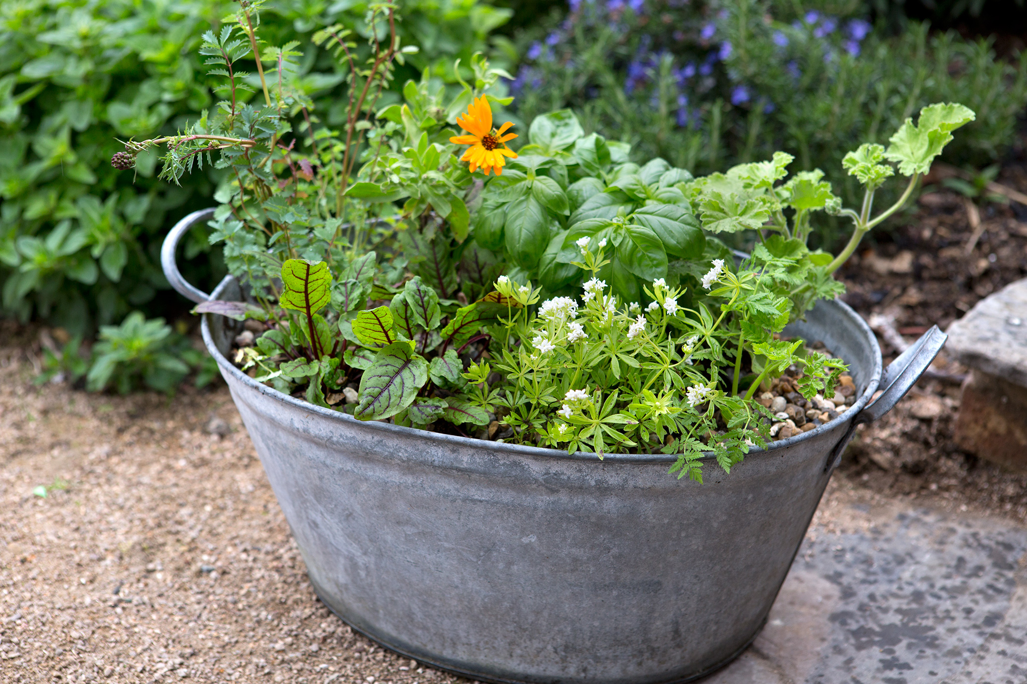 Tips for Time-Poor Gardeners