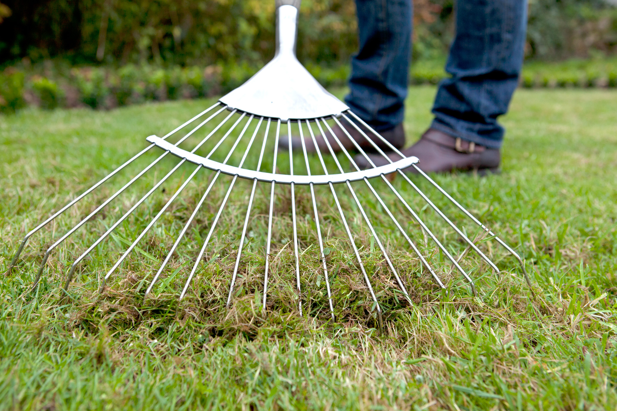raking-thatch-out-of-lawn-2