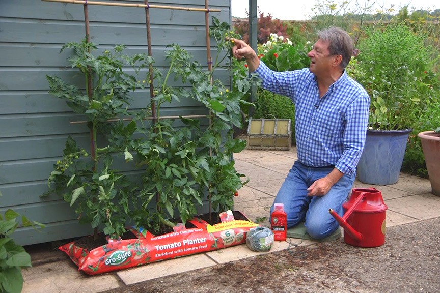 Caring for tomatoes NFG video