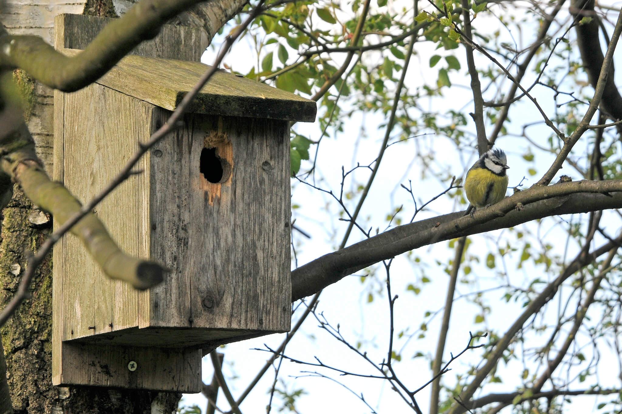 Wooden bird box