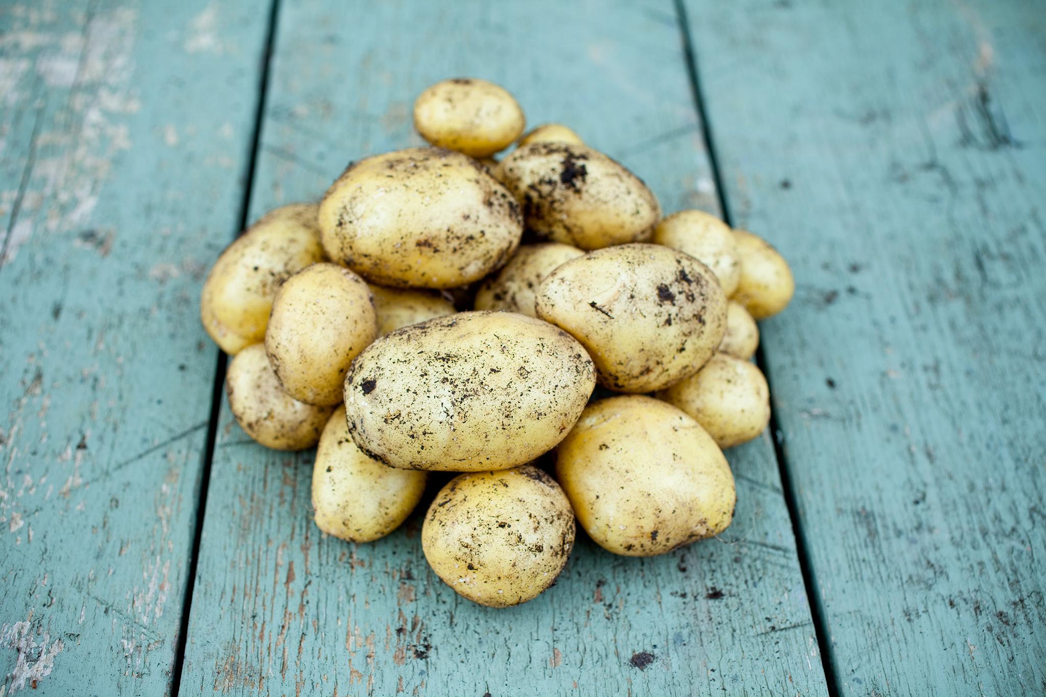 'Orla' potato