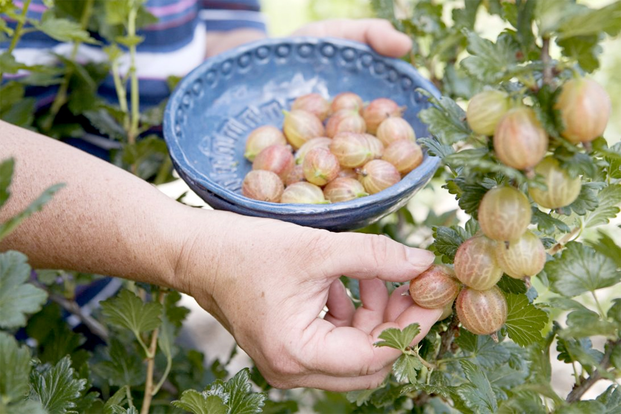 How to buy fruit trees and bushes