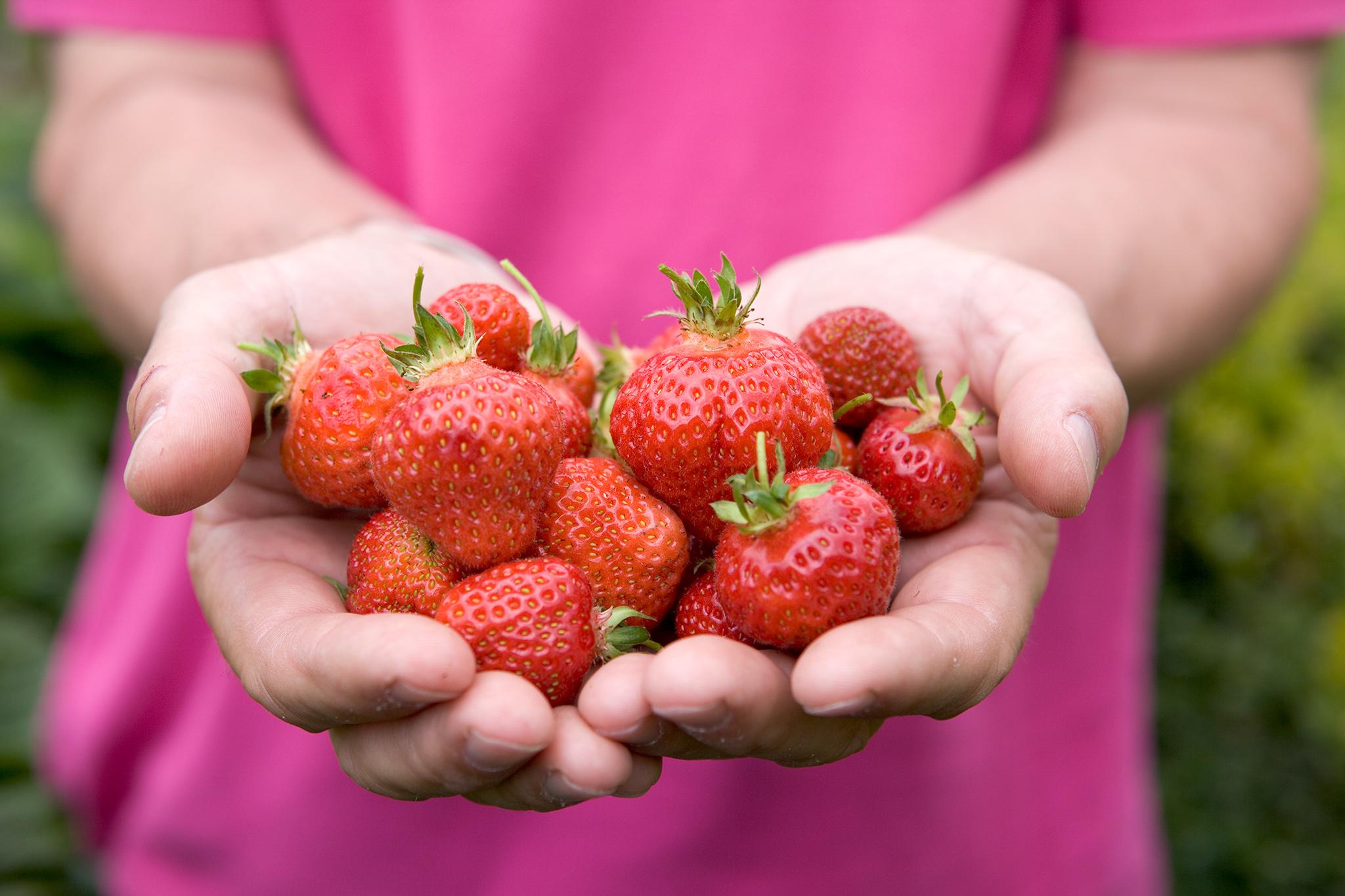 strawberries-18
