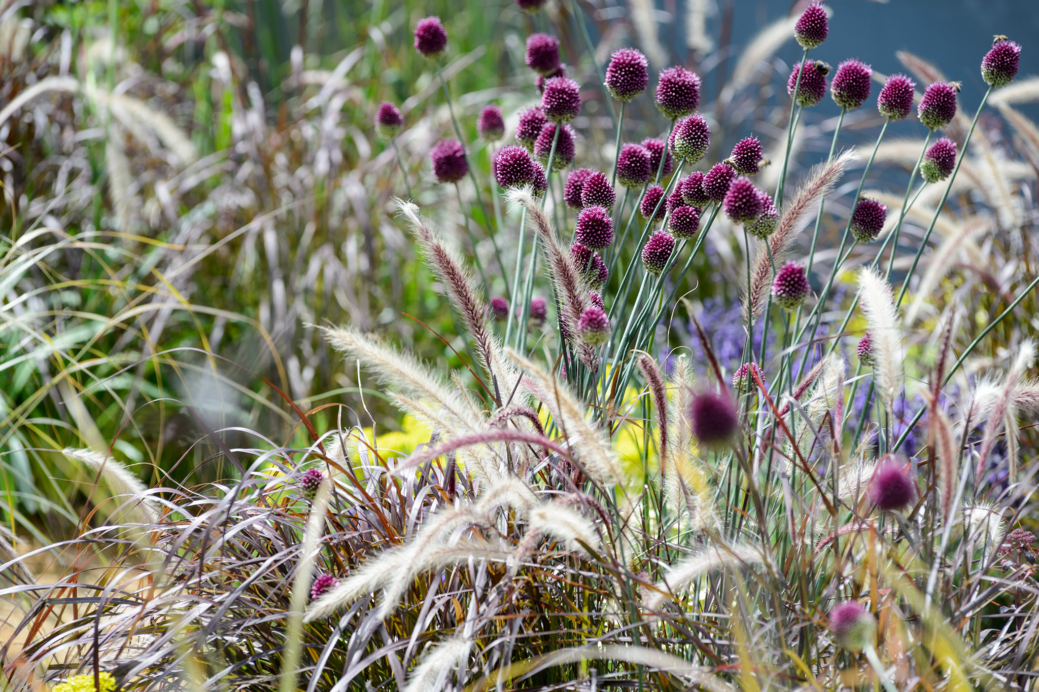 Eight plants that self seed for Planting schemes with grasses