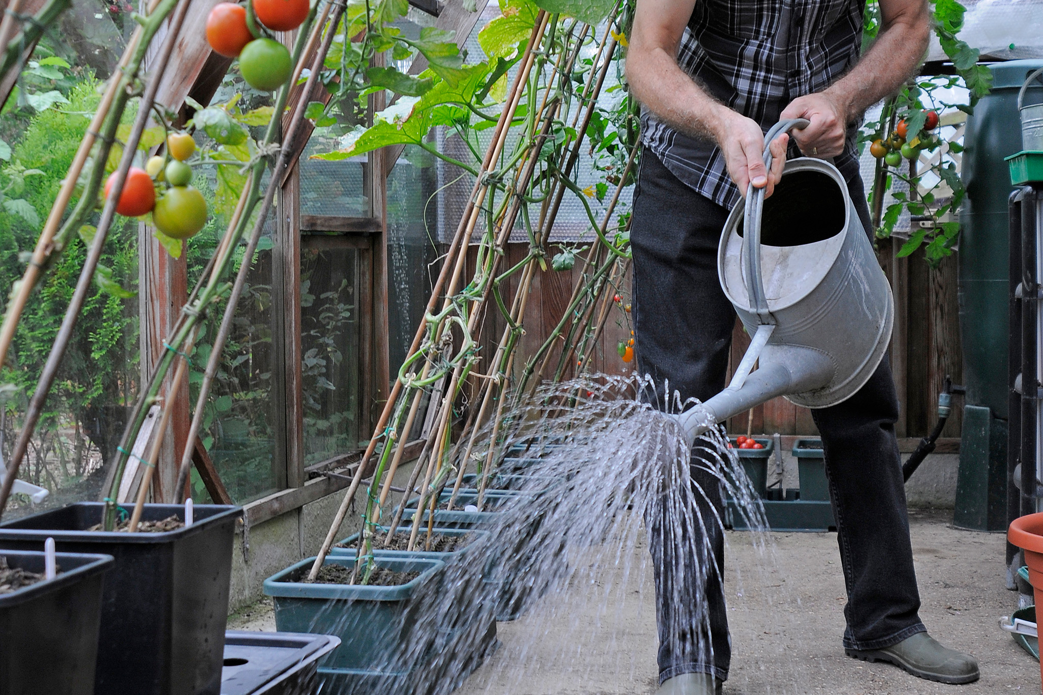 damping-down-the-greenhouse-8