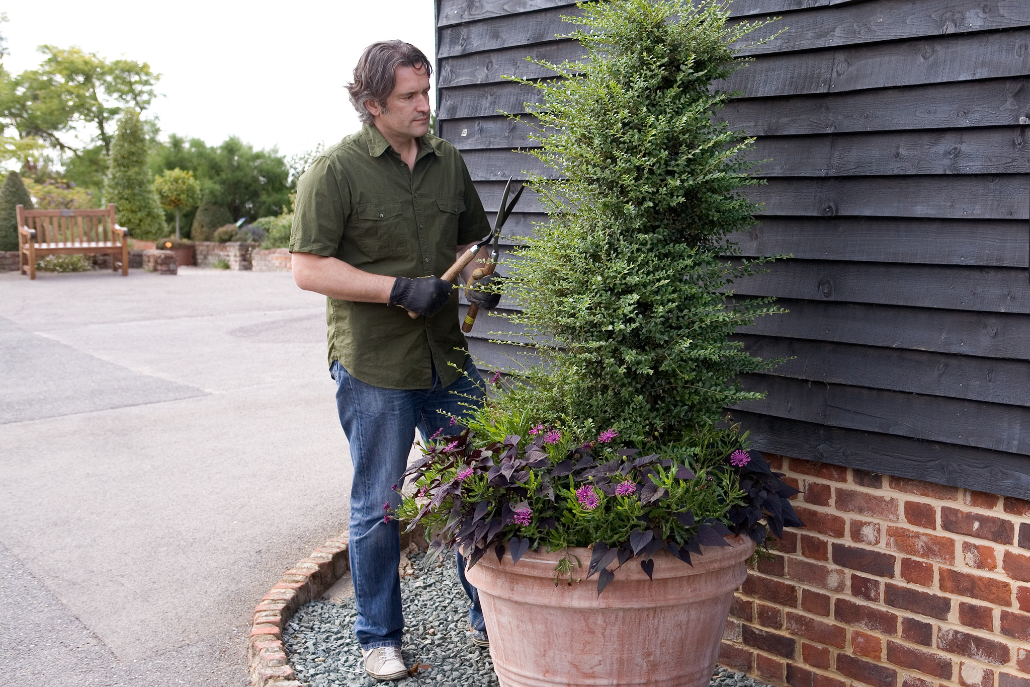how to prune a topiary