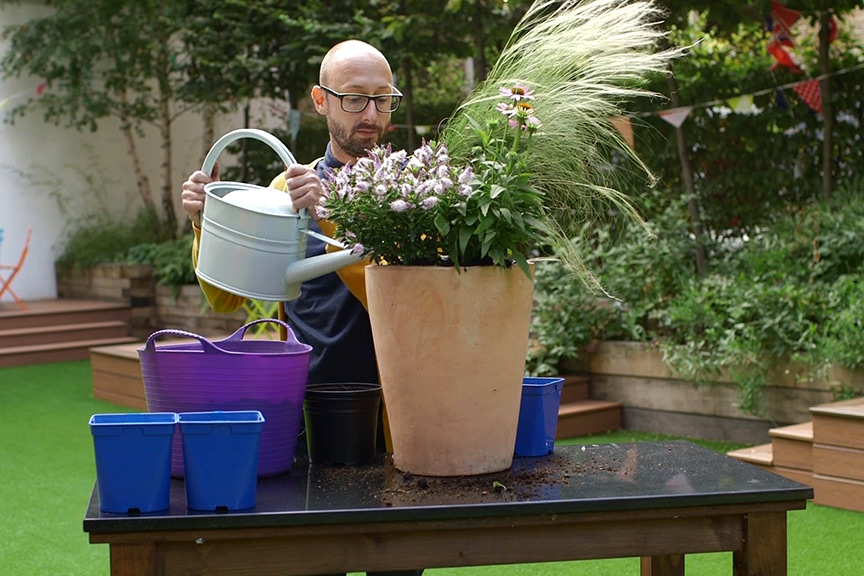 Planting in pots video