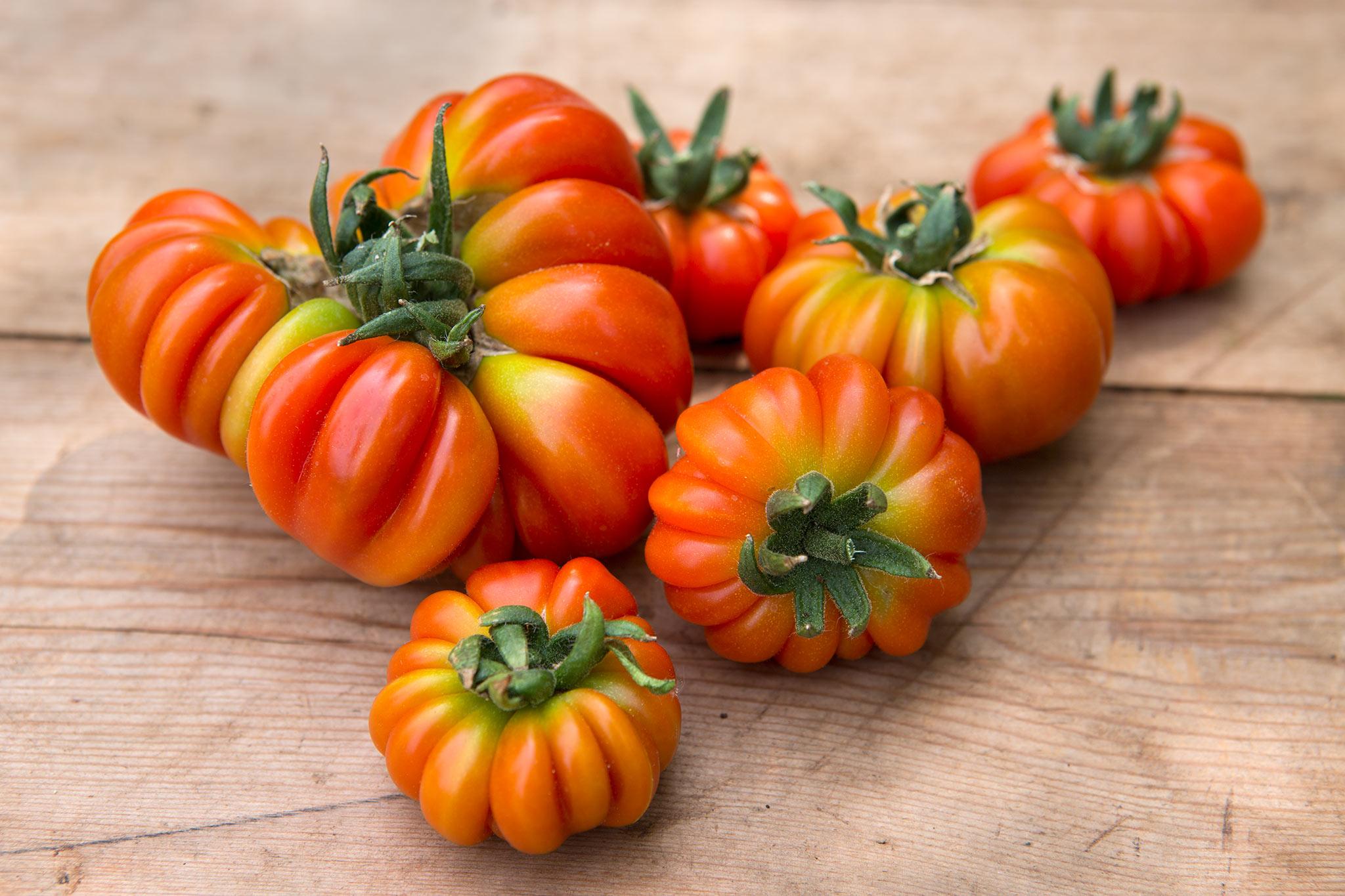 tomato-costoluto-genovese-2
