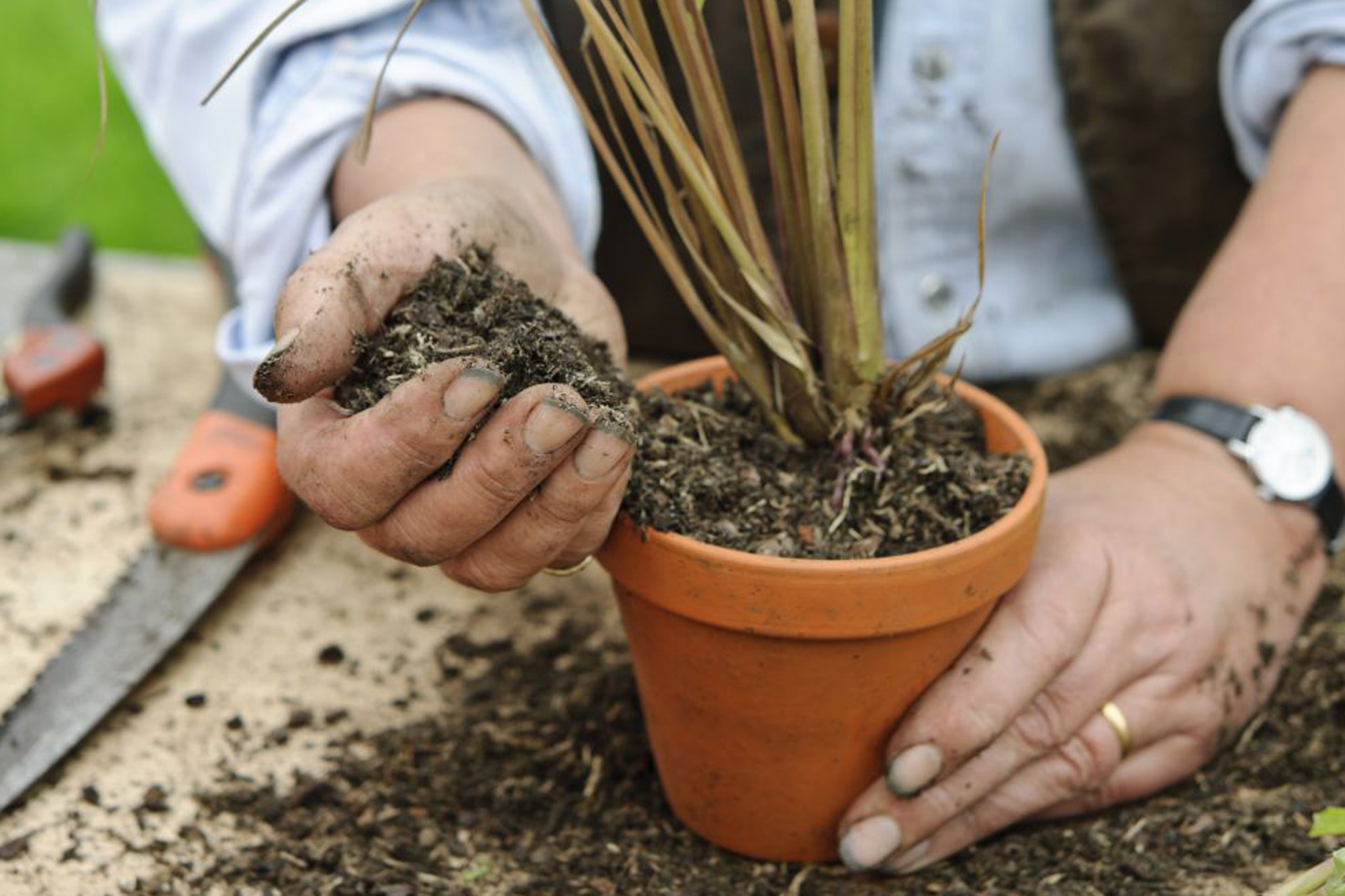 place-the-lemongrass-in-a-new-container-2