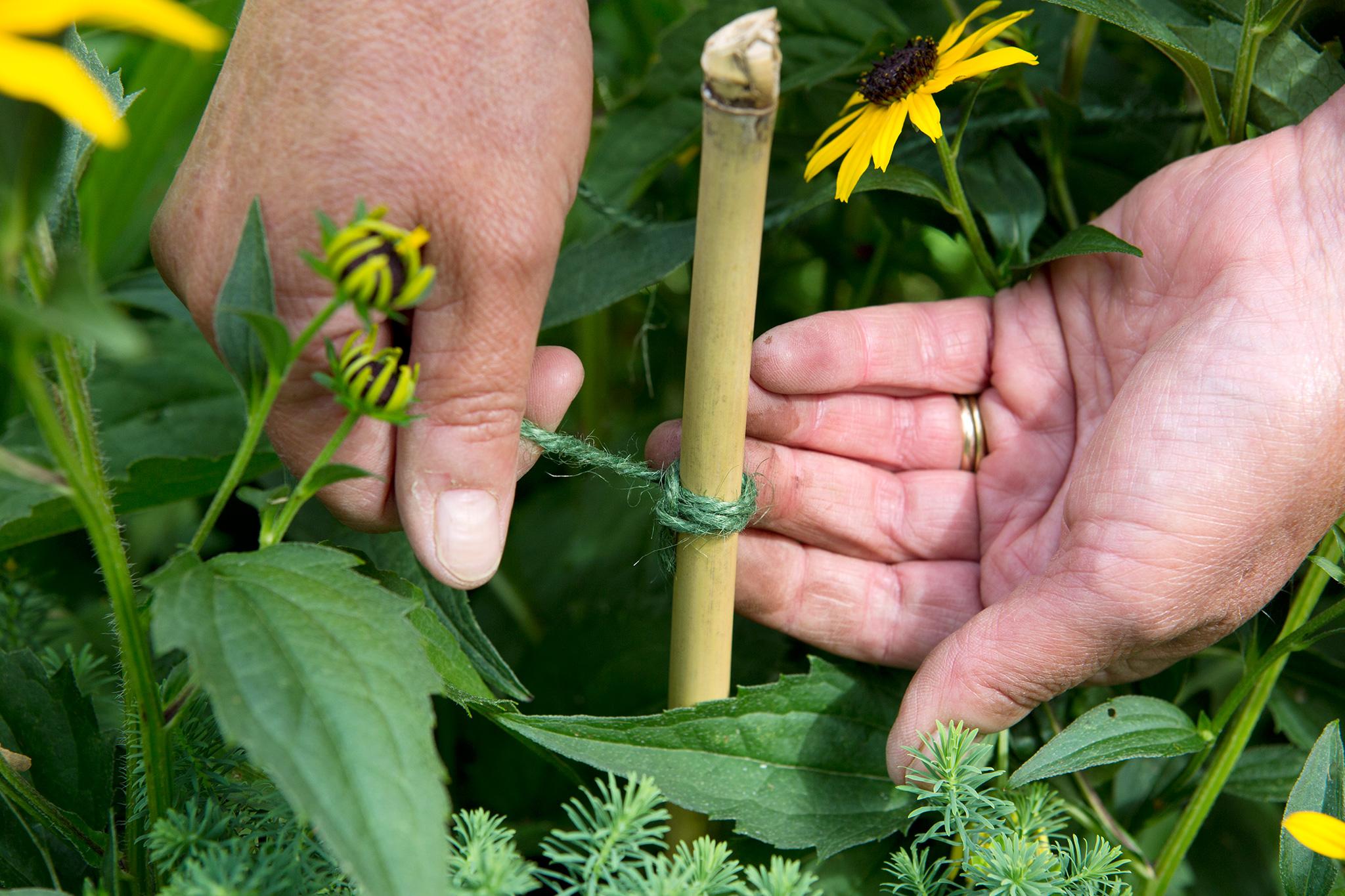 tying-string-to-garden-cane-2