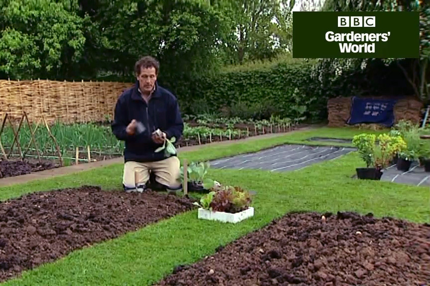 How to plant cabbages video