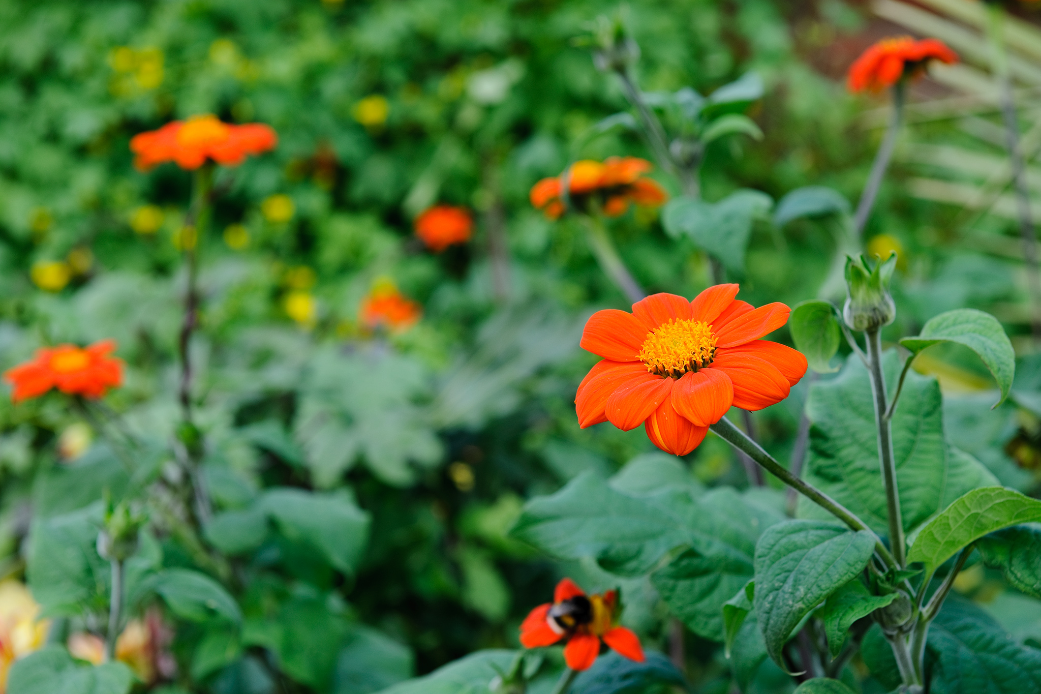 Best Plants With Orange Flowers Gardenersworld