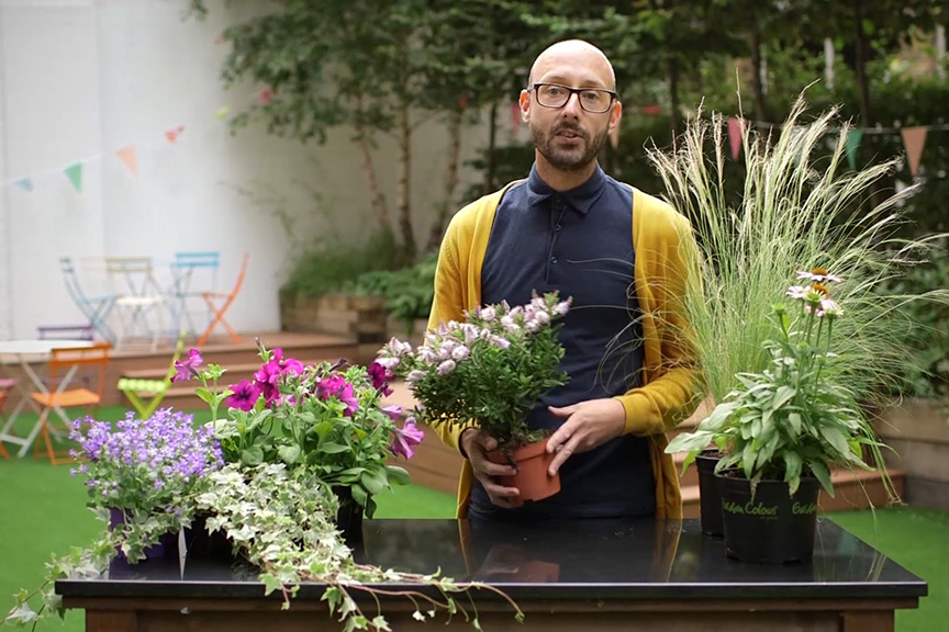 Choosing plants for pots video