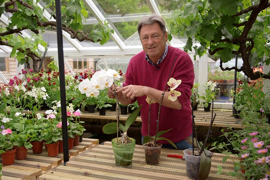 Moth orchid care NFG video