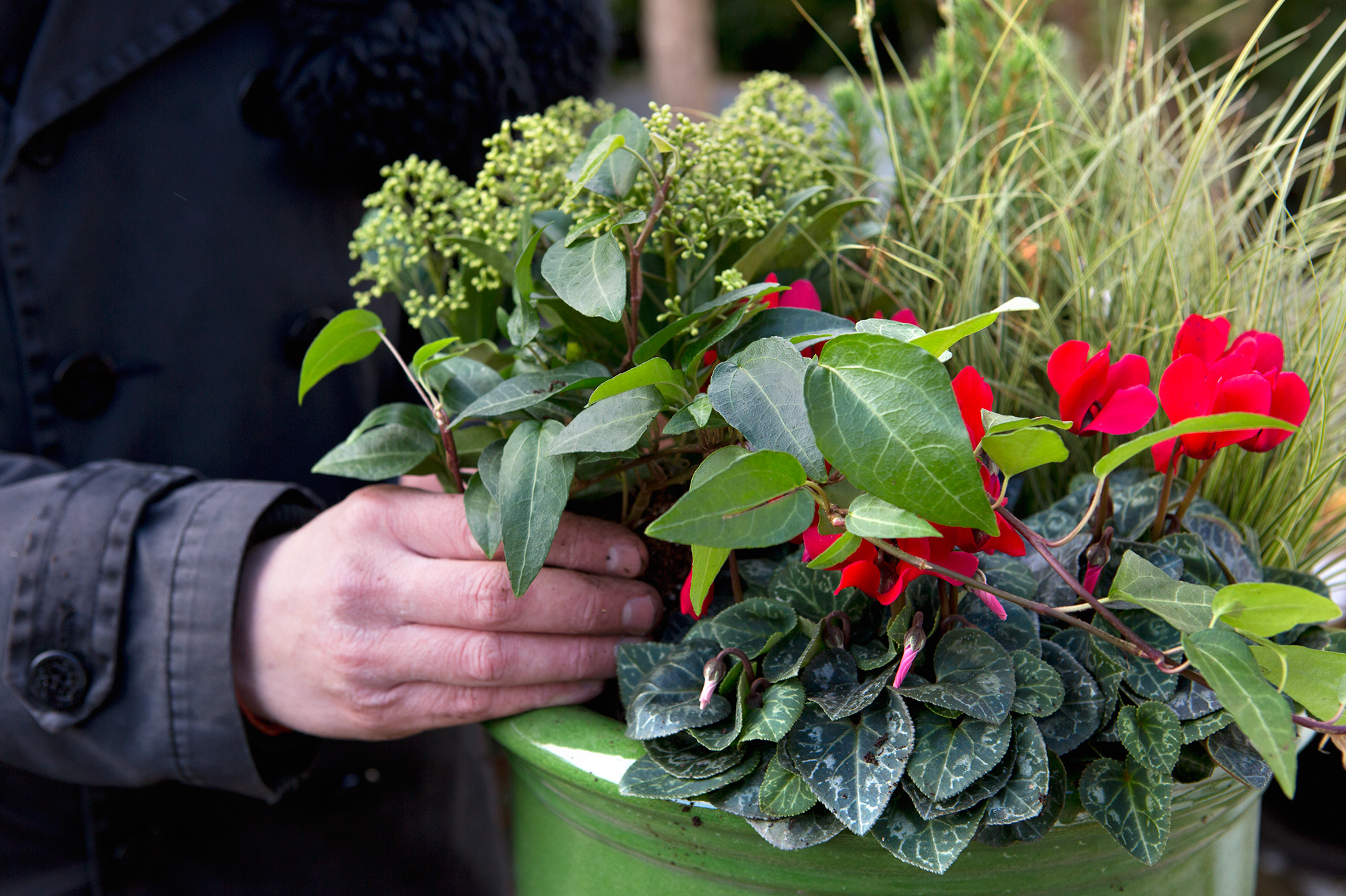 planting-a-winter-container-2