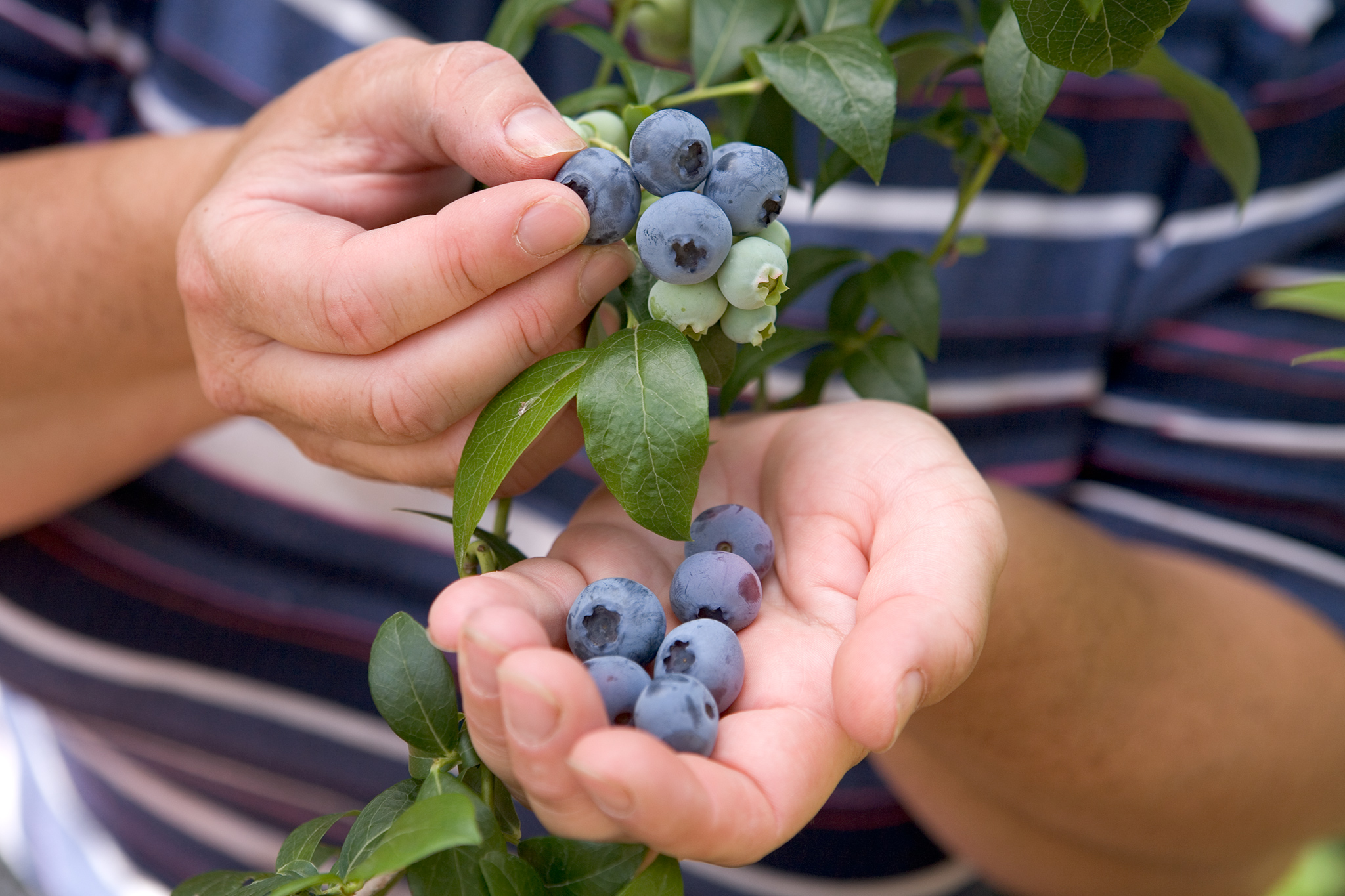 blueberries-high-in-vitamin-c-2
