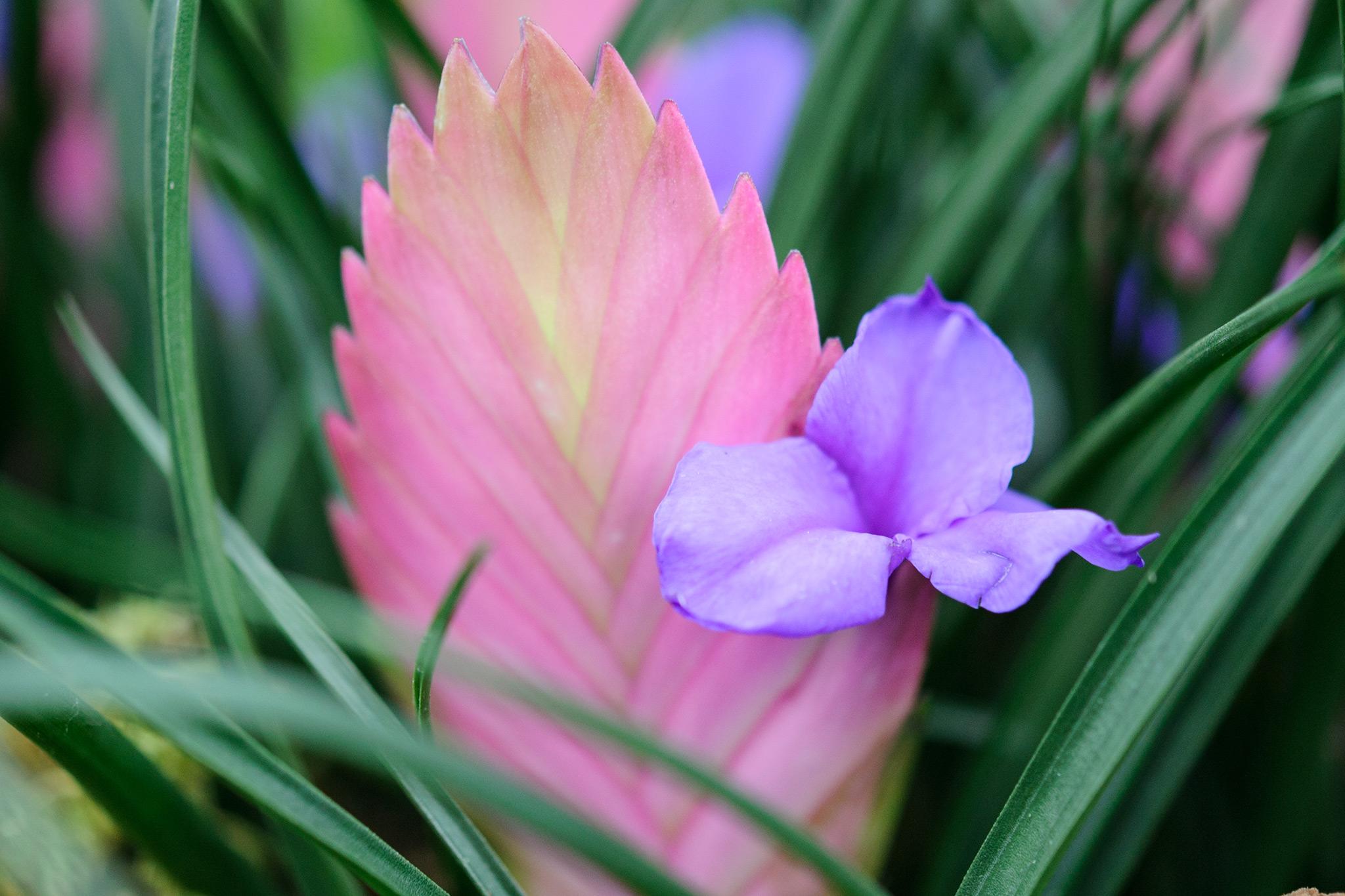10 exotic house plants gardenersworld 10 exotic house plants mightylinksfo