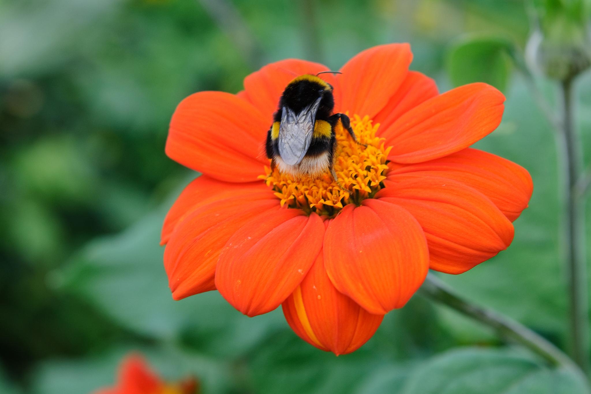 How To Make a Bee-Friendly Garden - gardenersworld.com