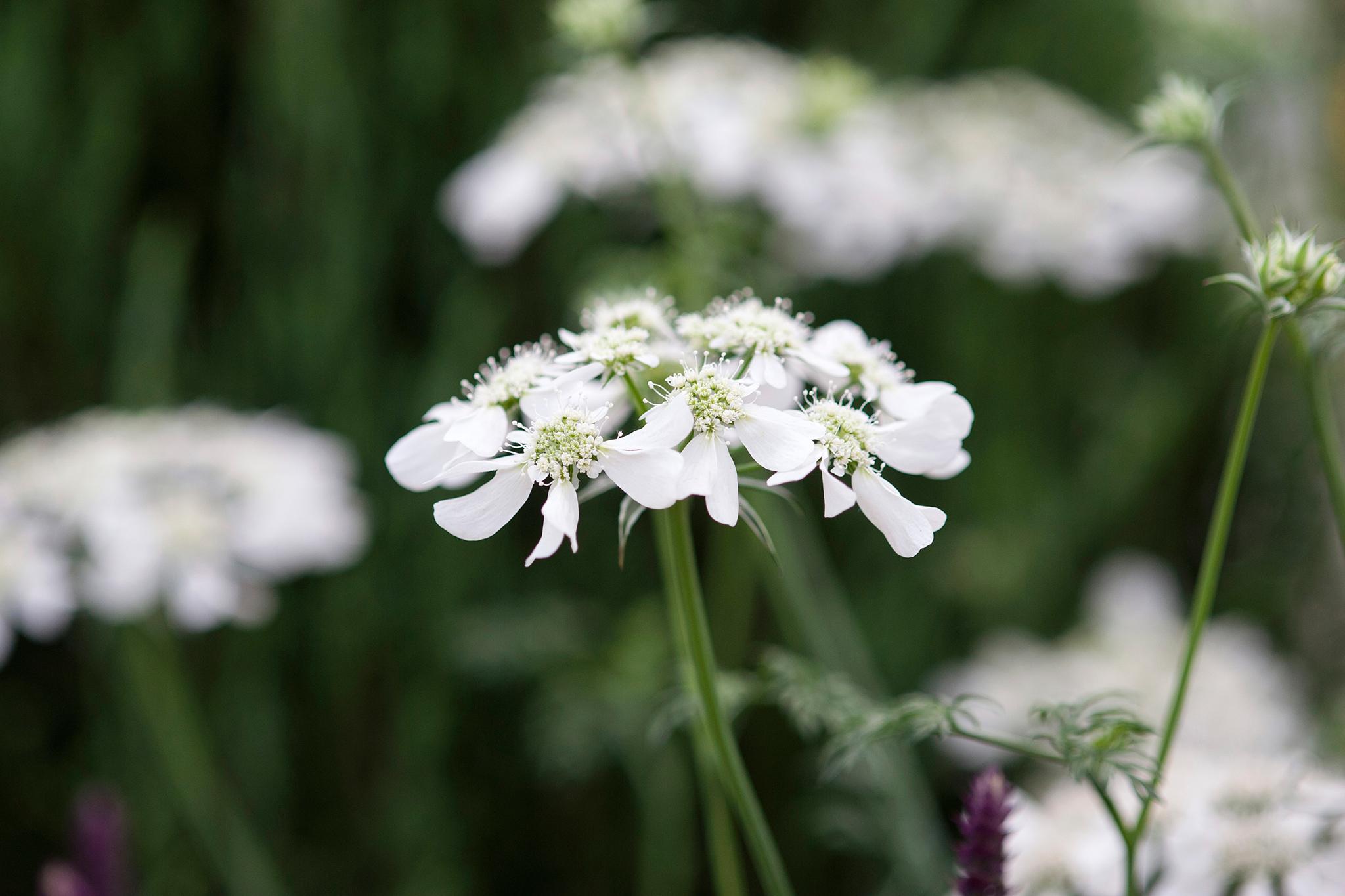 Flowers To Sow In October Gardenersworld
