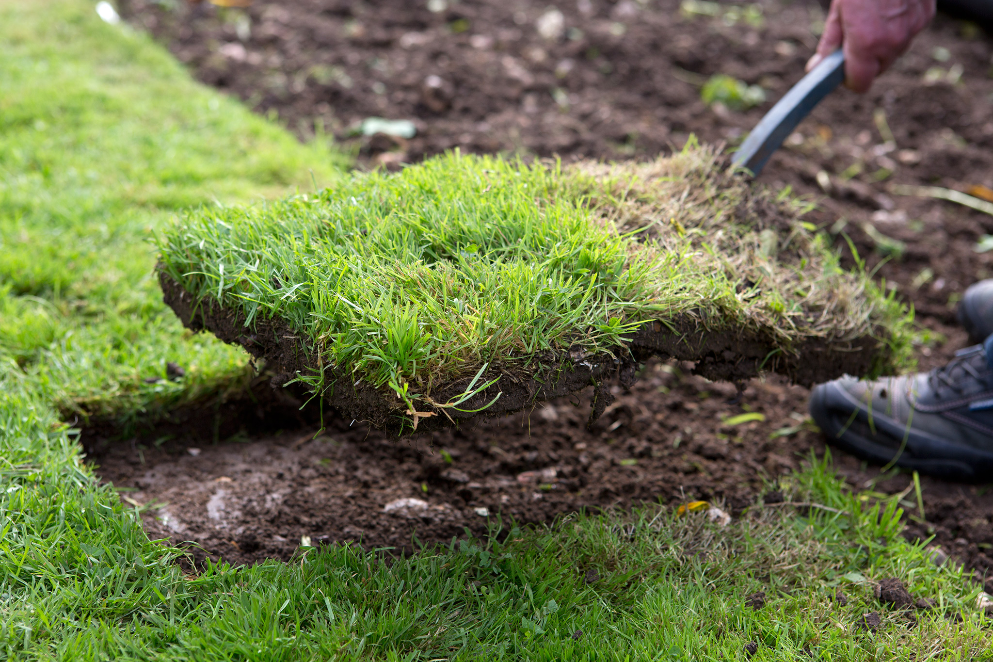 how to make a new lawn grow faster