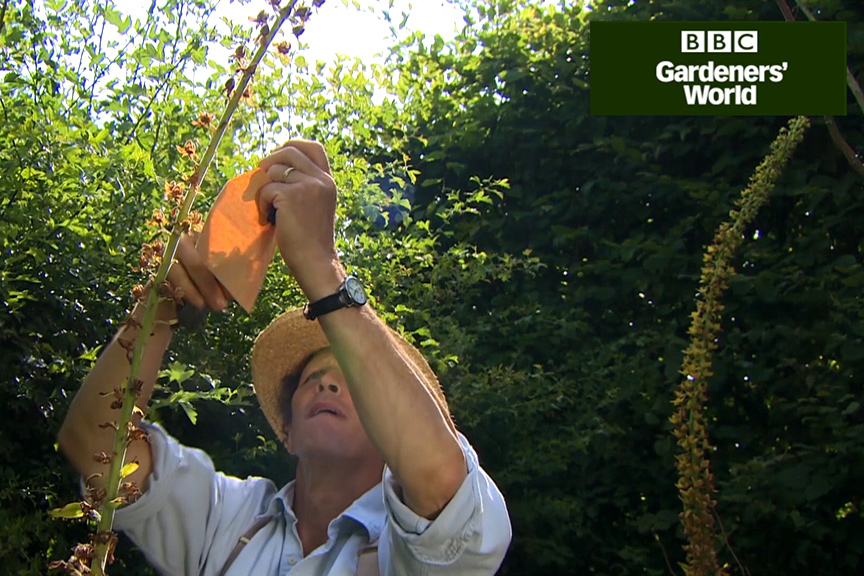 How to collect seeds from garden plants video
