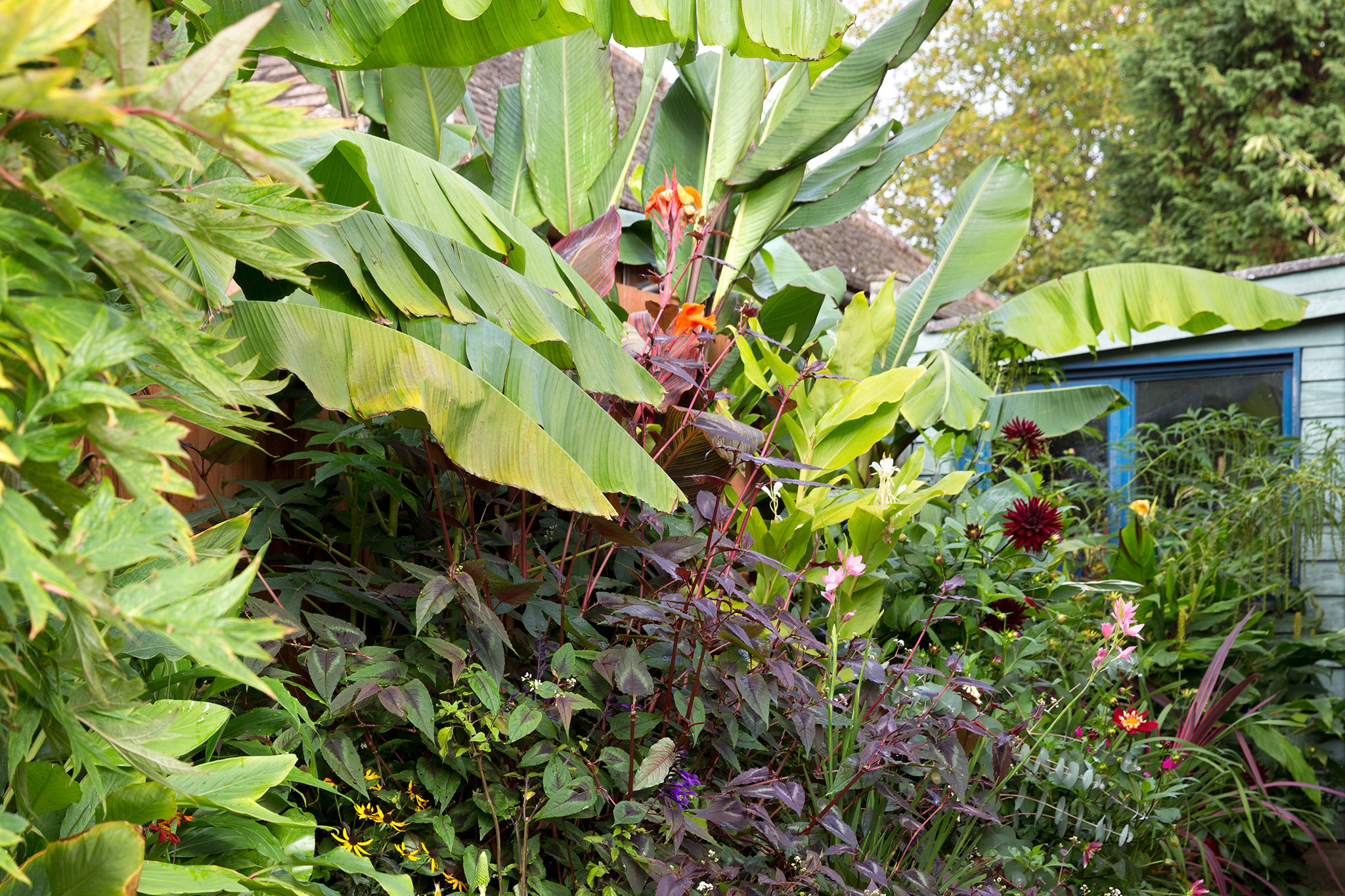 Plants With Bold Foliage Gardenersworld