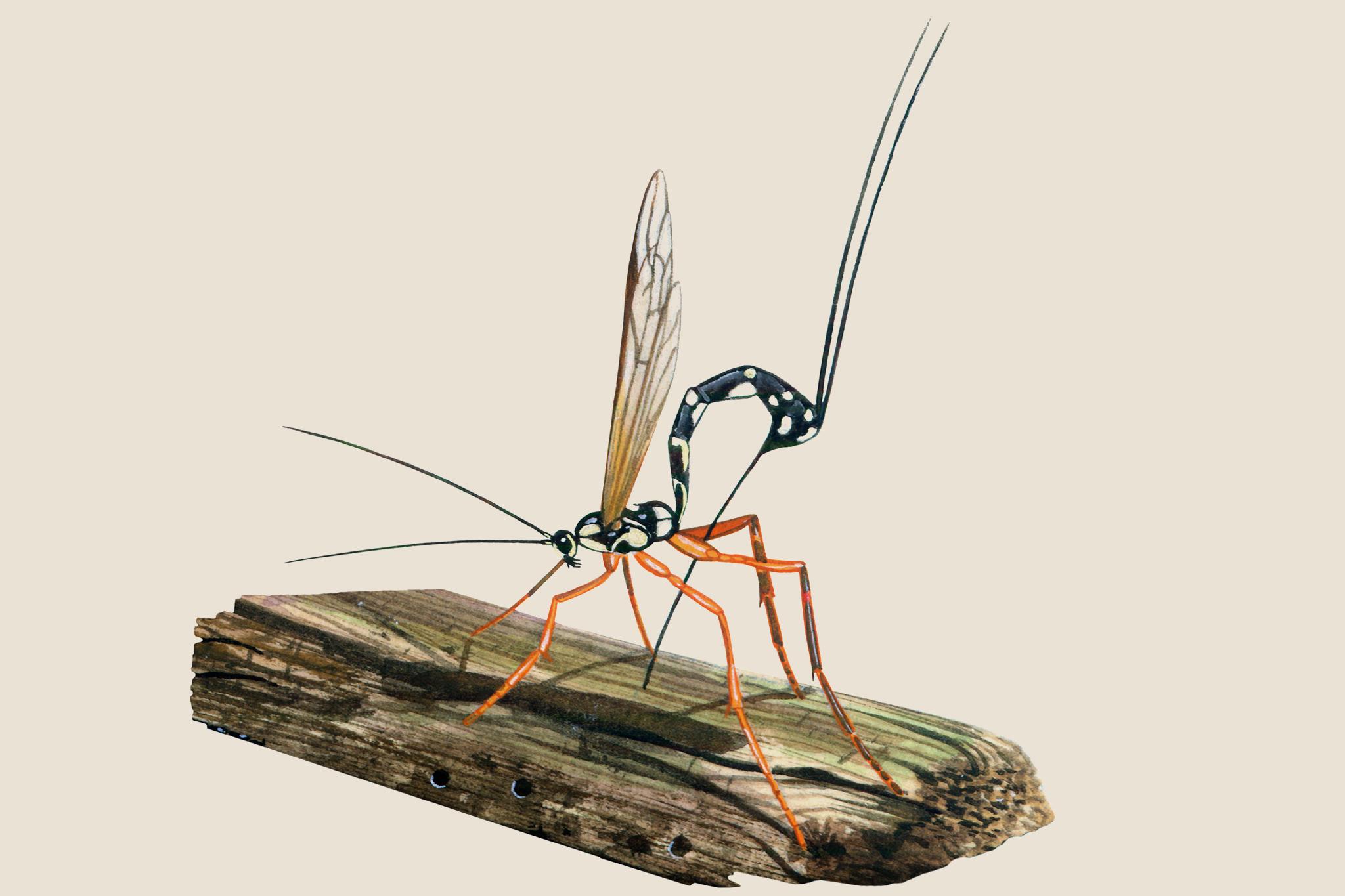 Garden wildlife identifier: wasps