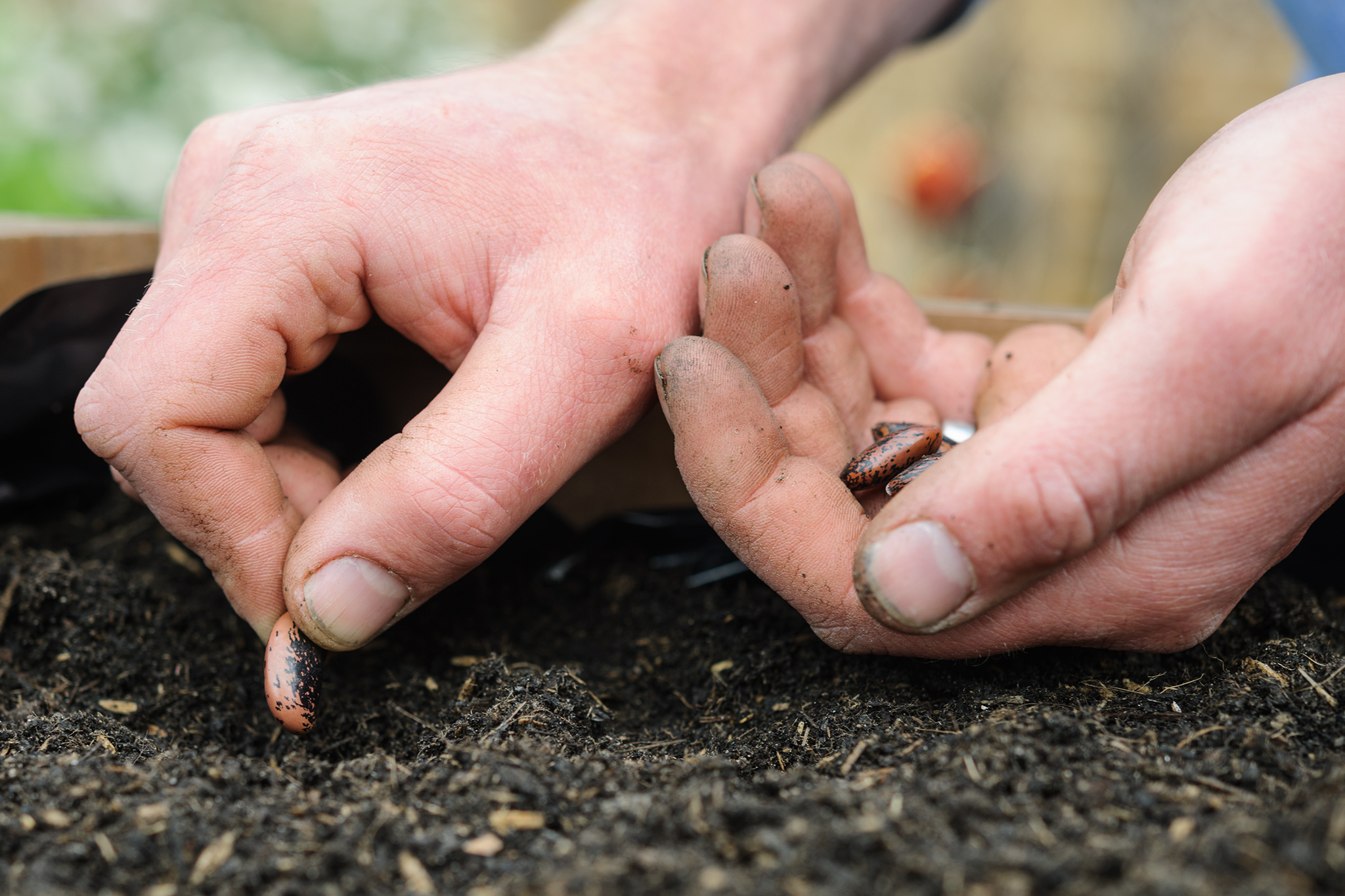 sowing-seeds-in-may-3