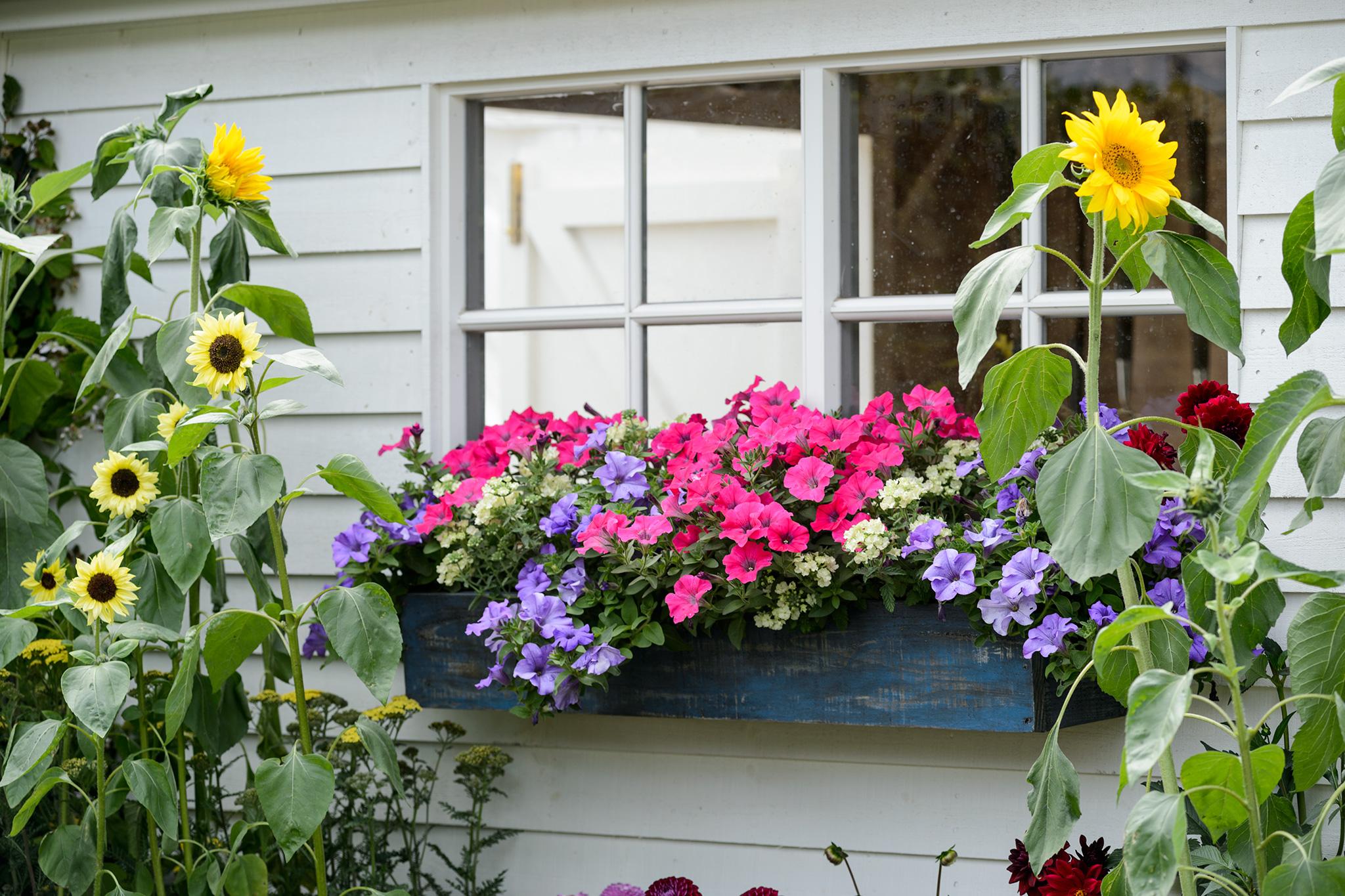 Gardening in a Rented Garden
