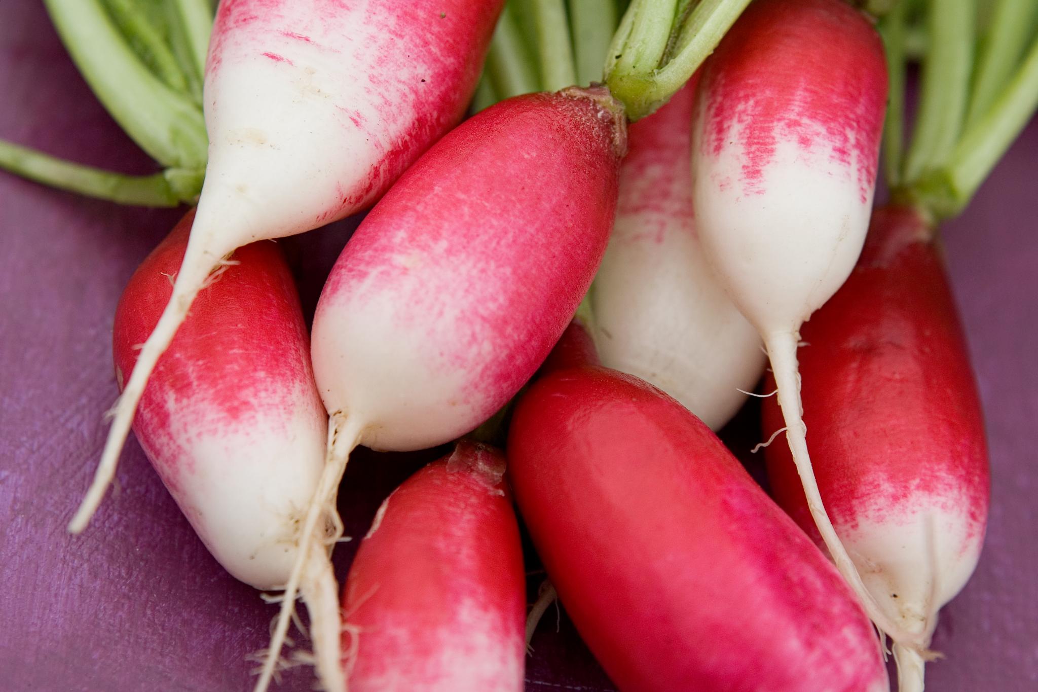radish-french-breakfast-8
