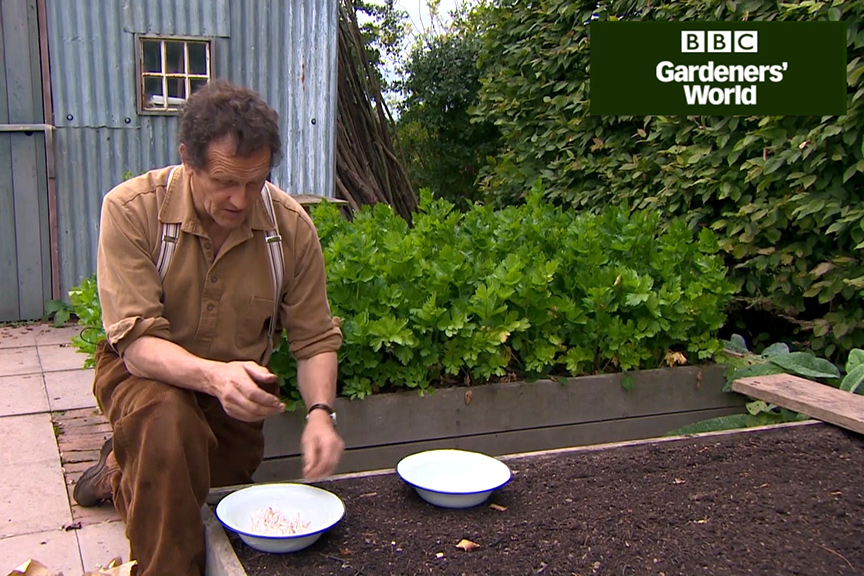 How to plant garlic in autumn video