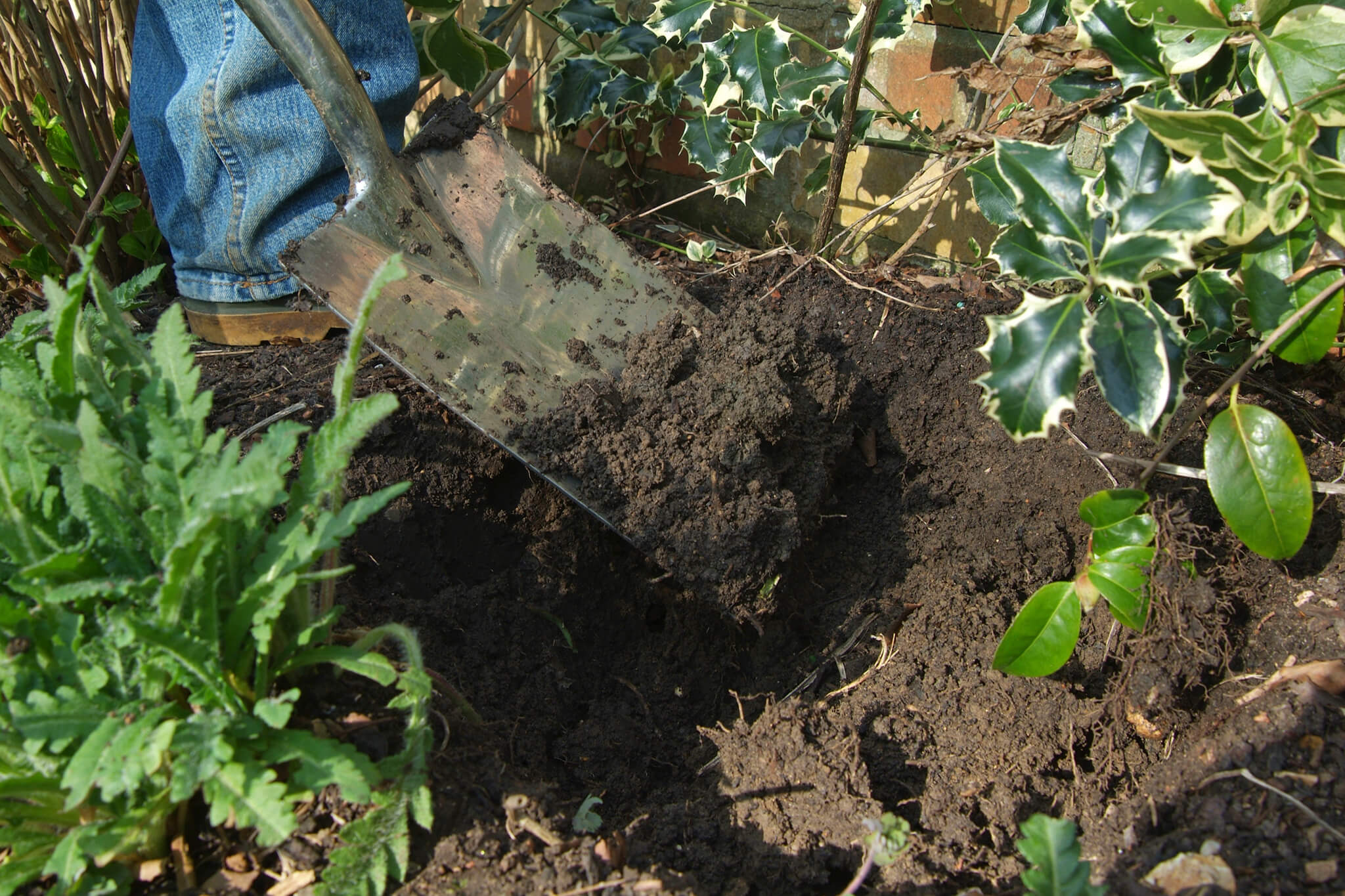 adding-organic-matter-to-the-planting-hole-3