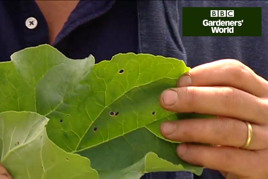 How to control aphids video