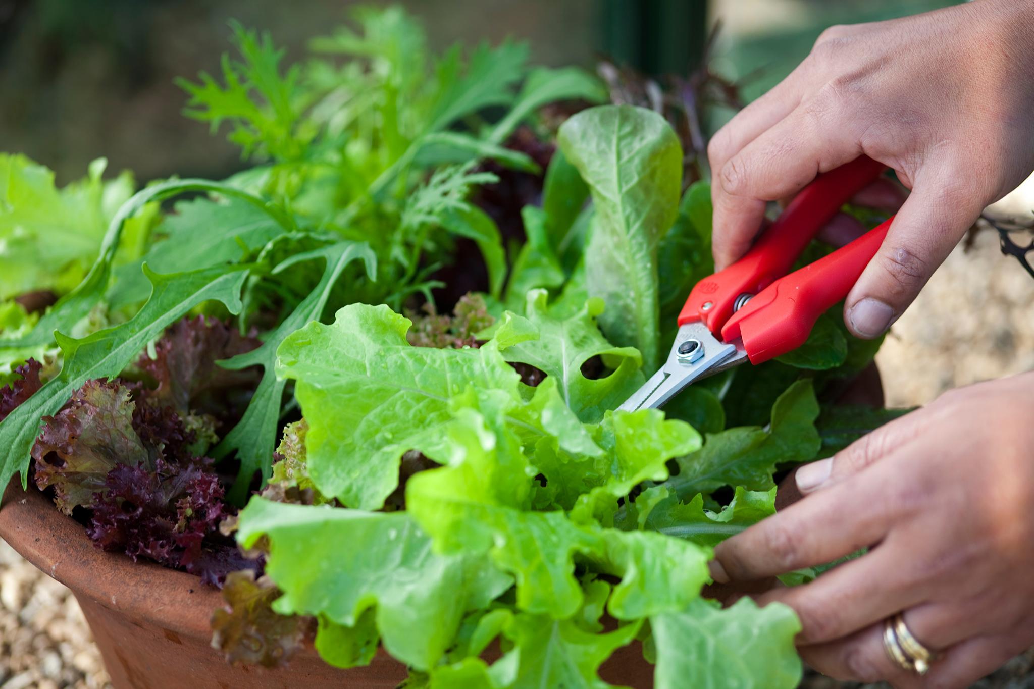 harvest-winter-salads-2