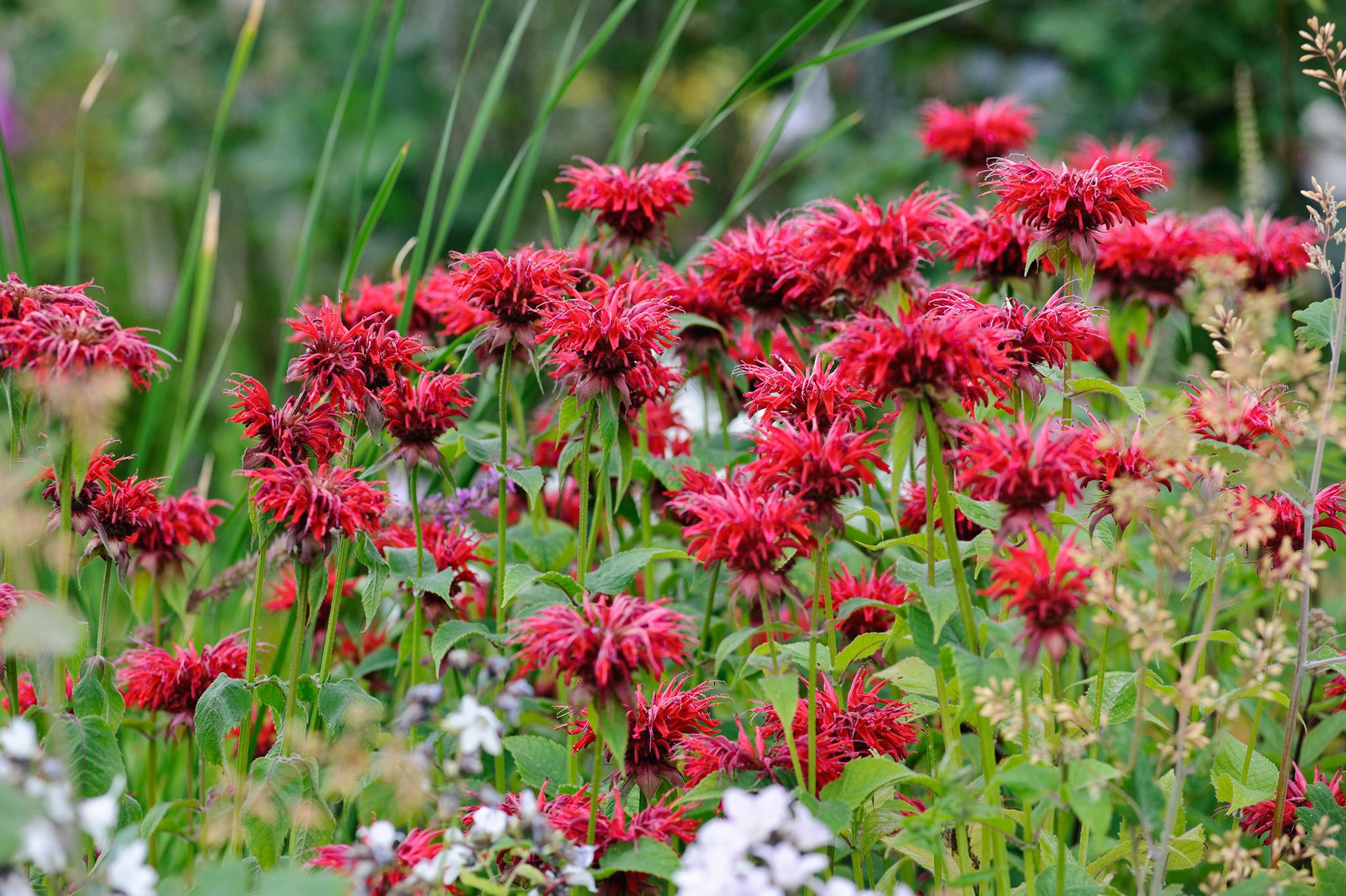 Flower Seeds To Sow In April Gardenersworld