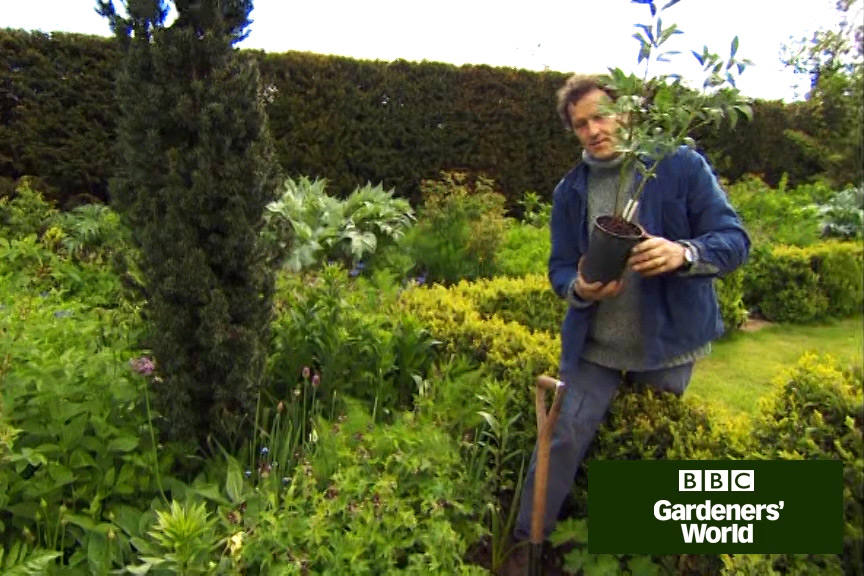How to plant herbaceous peonies video