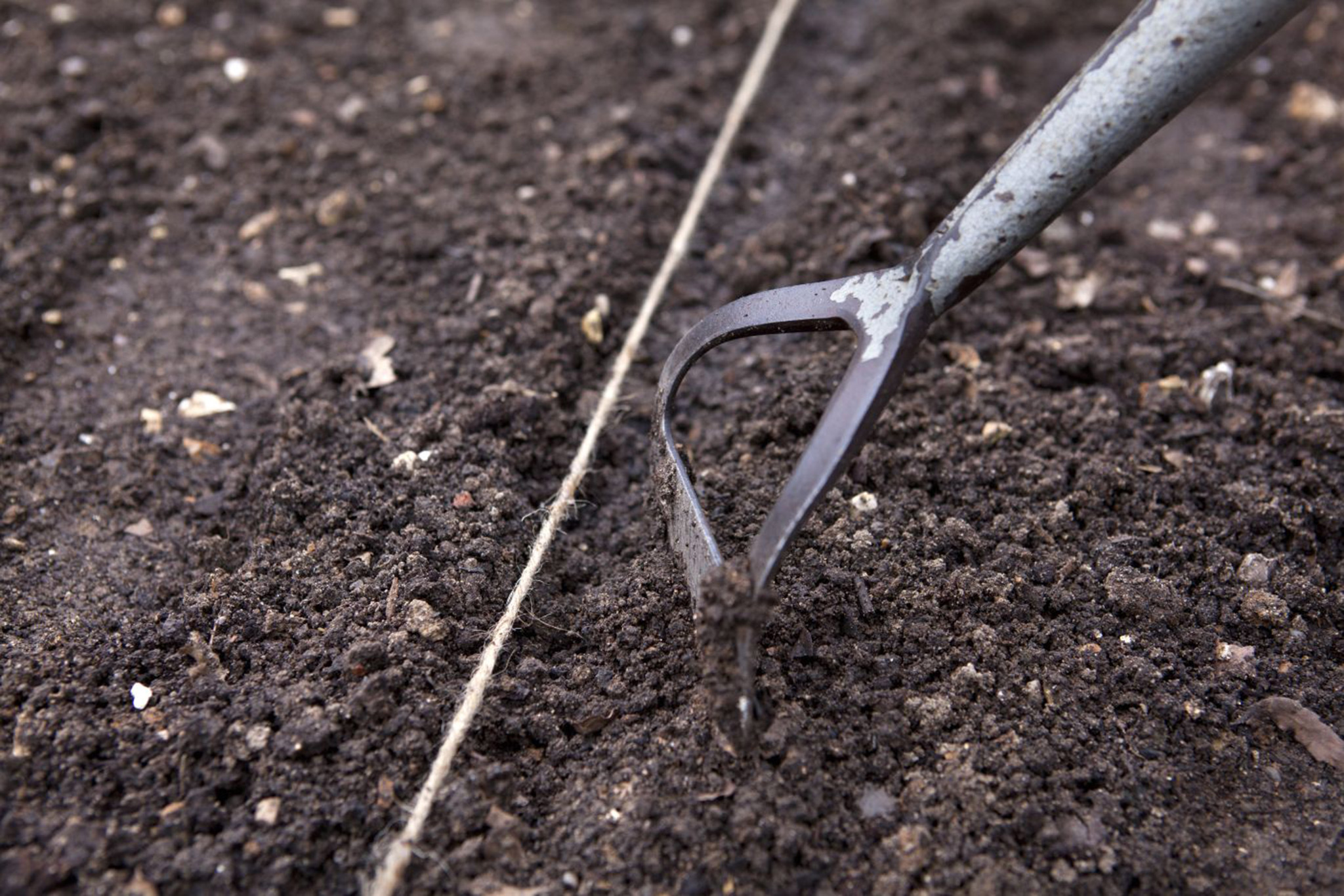 using-the-hoe-to-cover-rocket-seed-with-soil-2