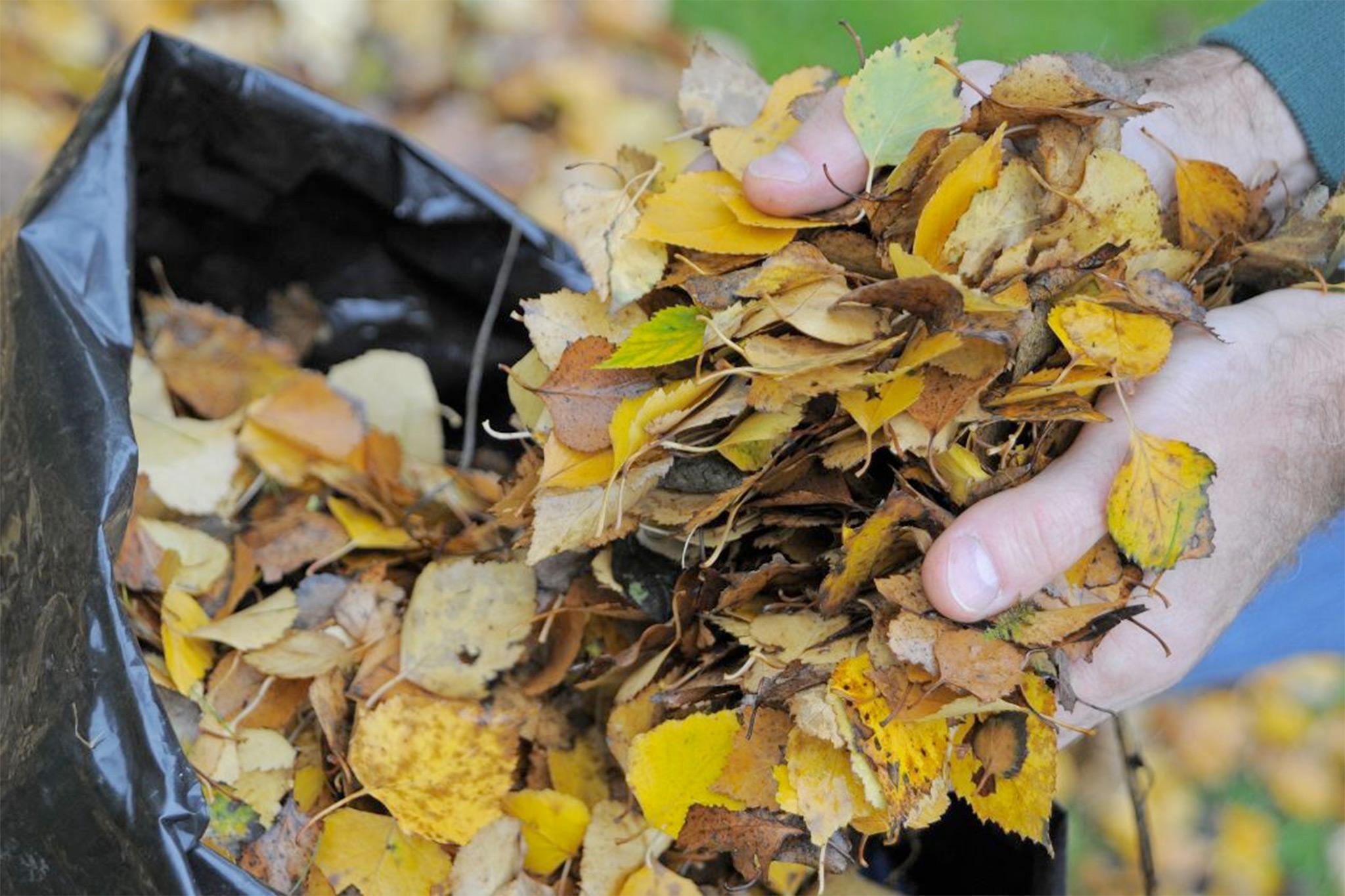 making-leaf-mould-2