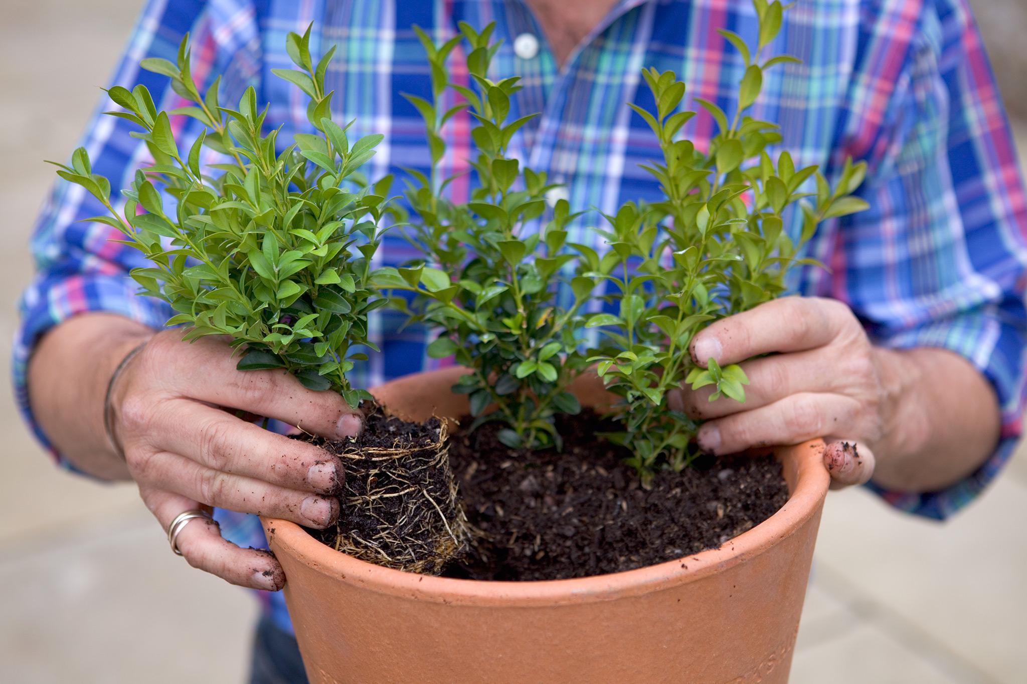 planting-the-box-plants-2