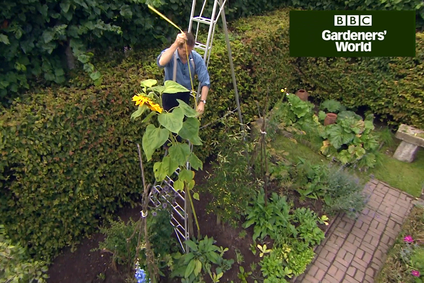 Monty Don's giant sunflower trial part four video